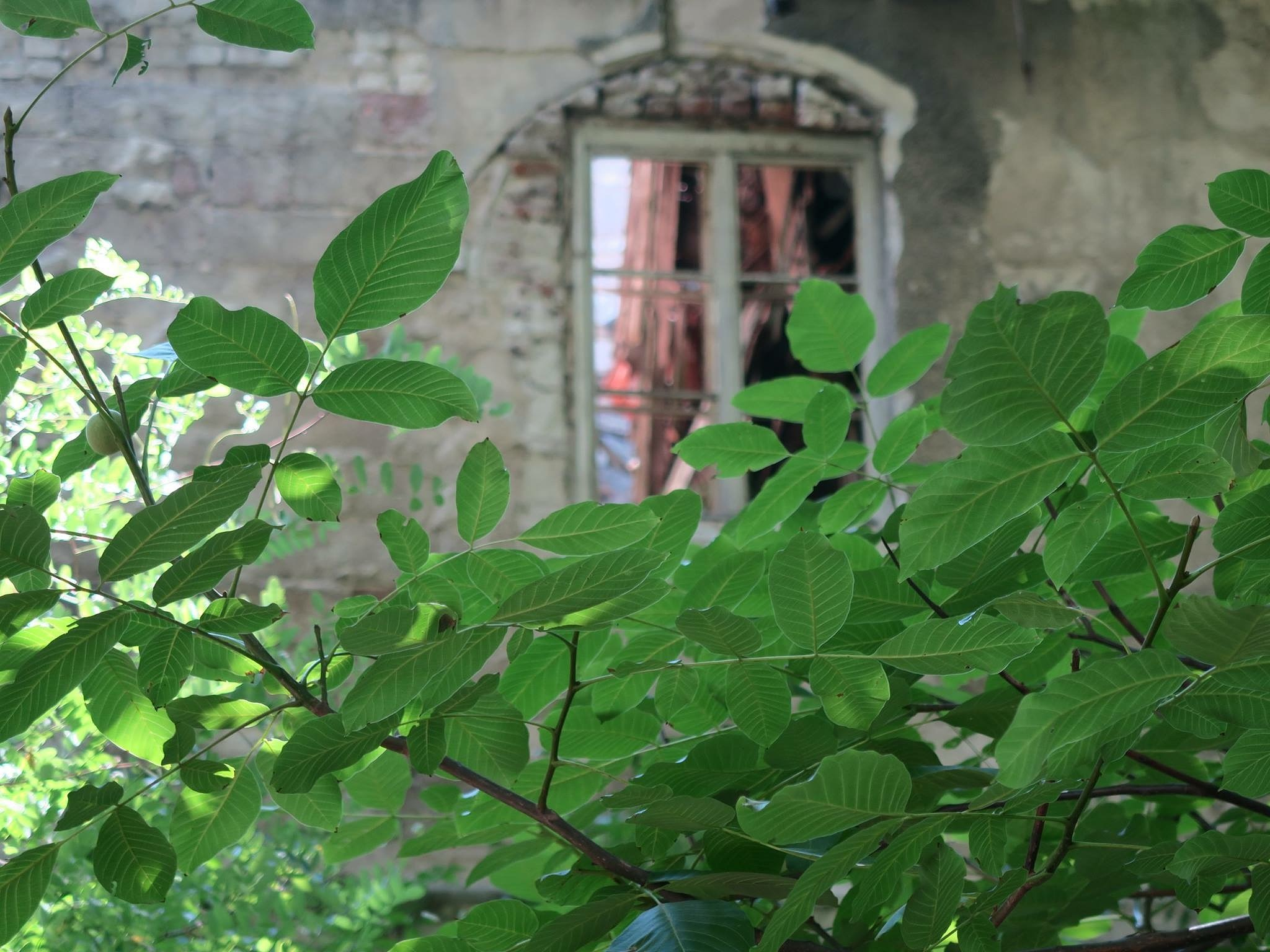 Lonely home by Bistra Belcheva