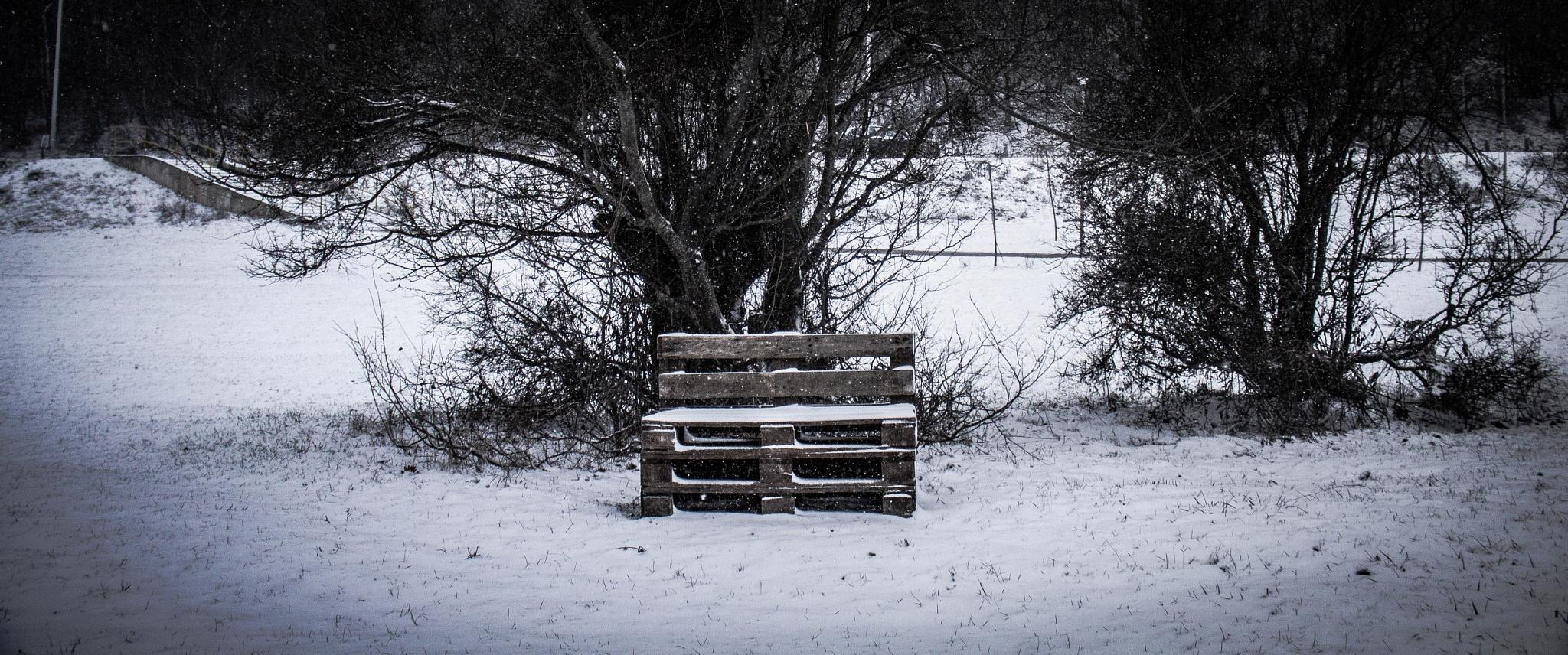 snow by elbunitr