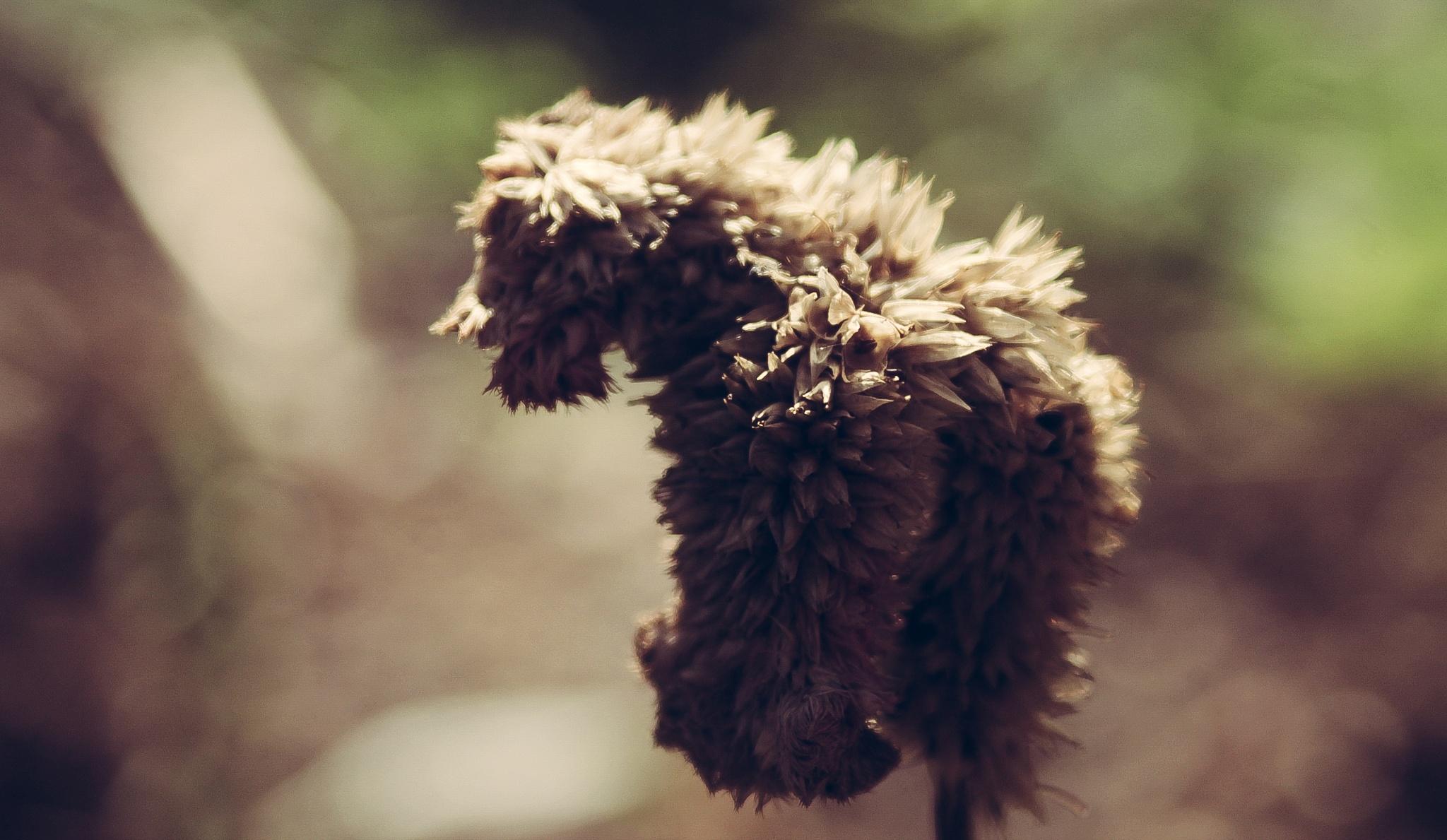 Flower by elbunitr