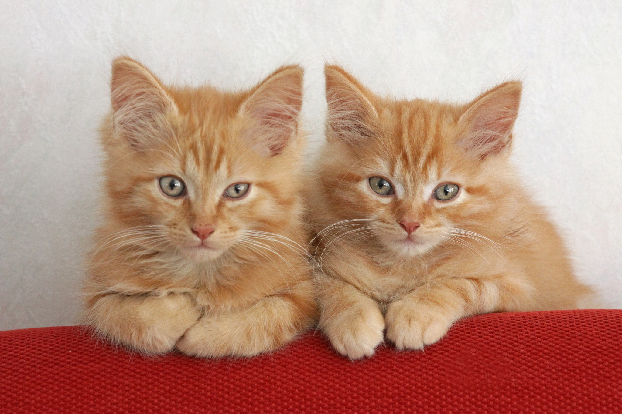Tom & Jerry....as young cats . by LucilleBall