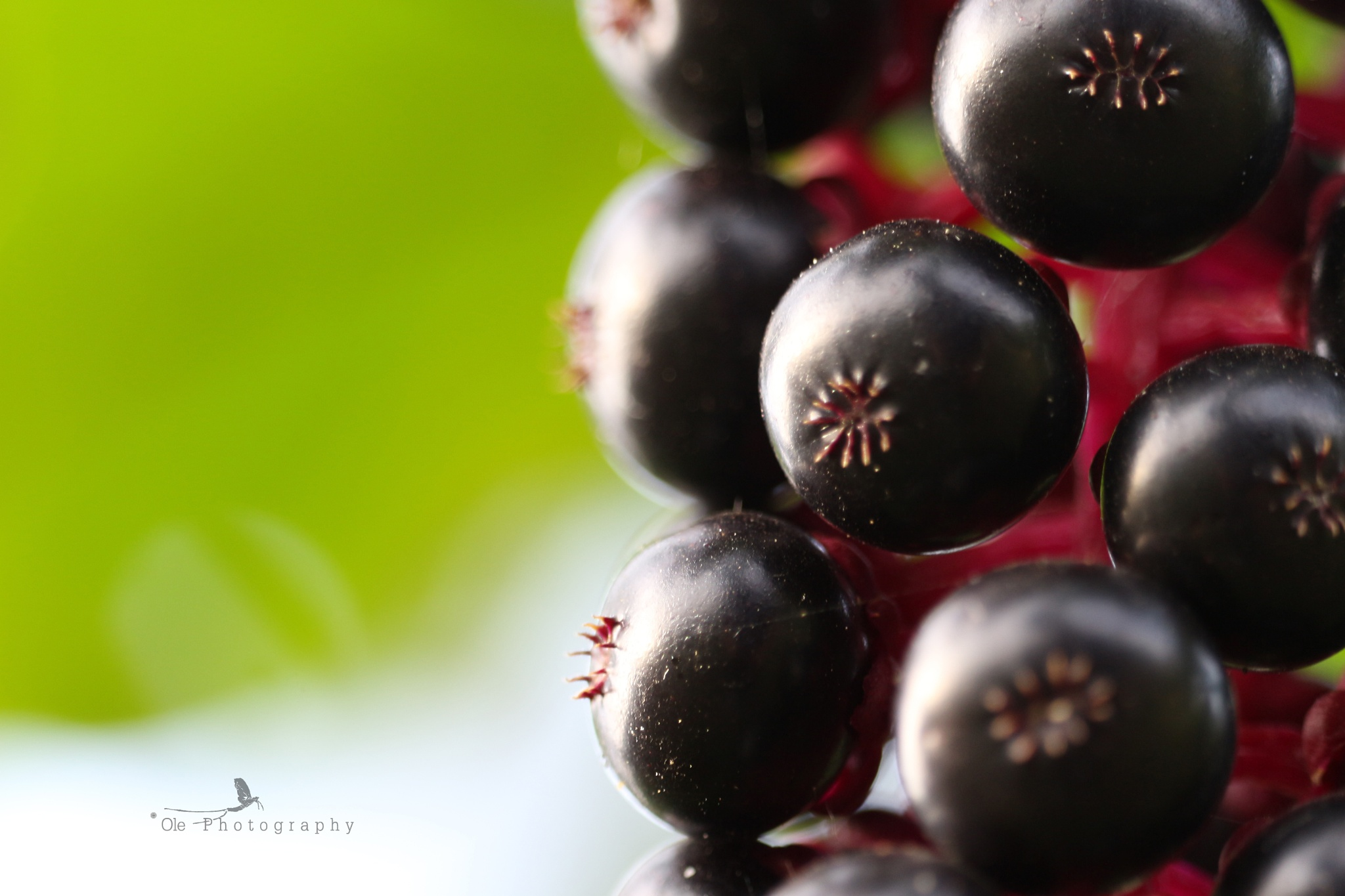 Berries by OlePhotography