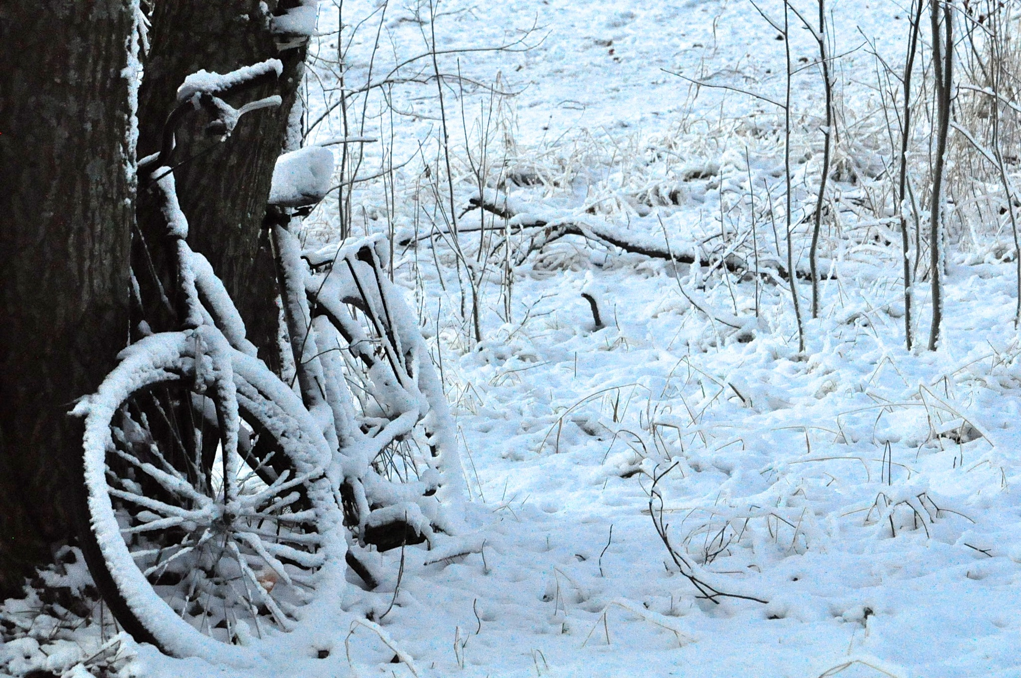 Winter by HelenaRy
