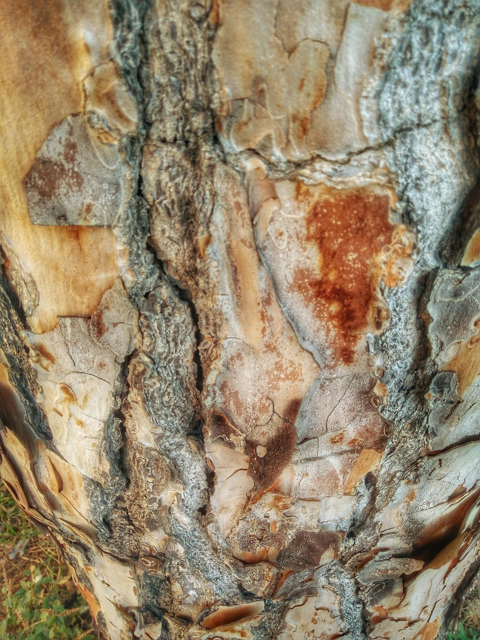 Age on a Tree by Fabio Pinna