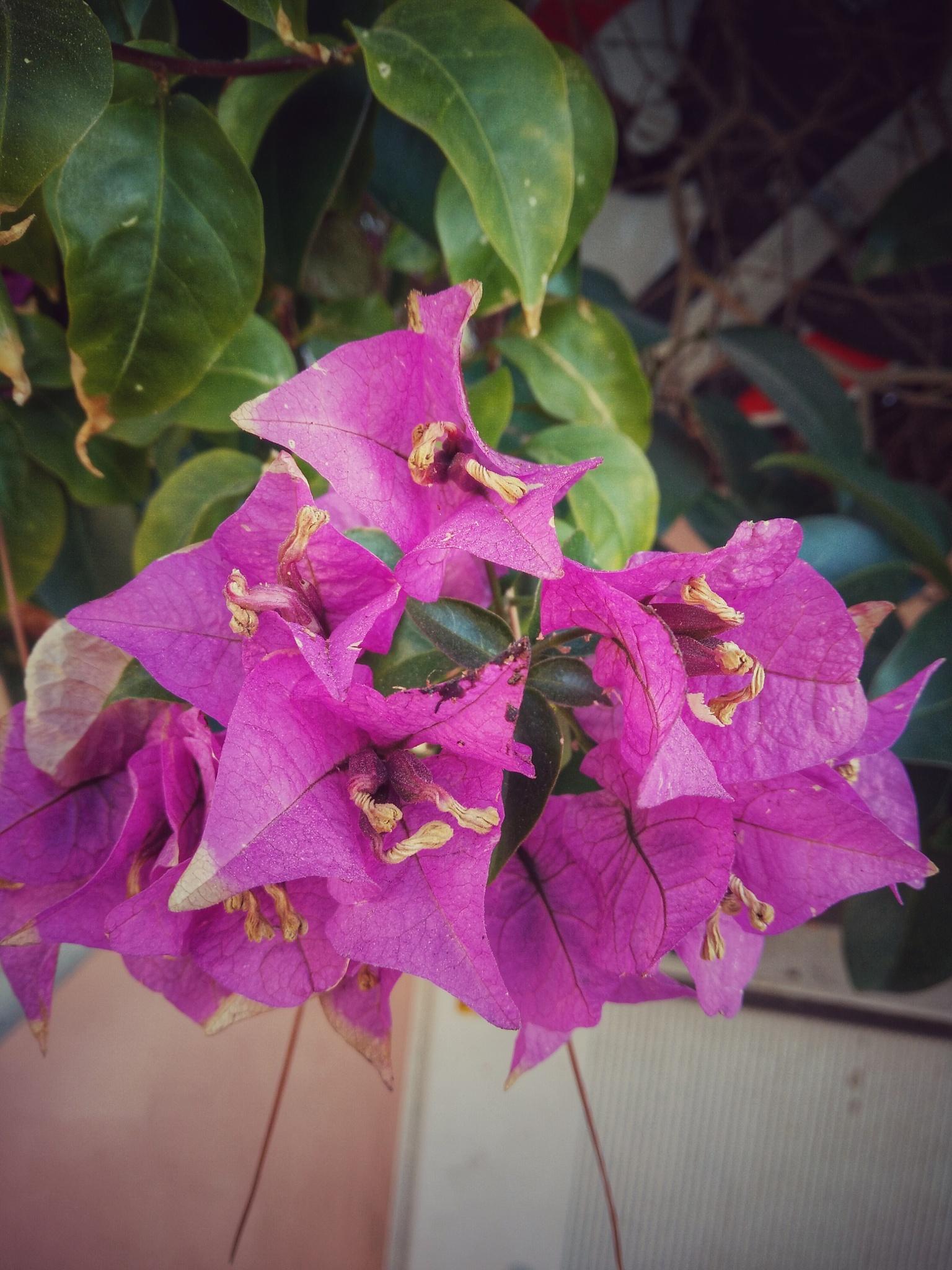 Flowers by Fabio Pinna
