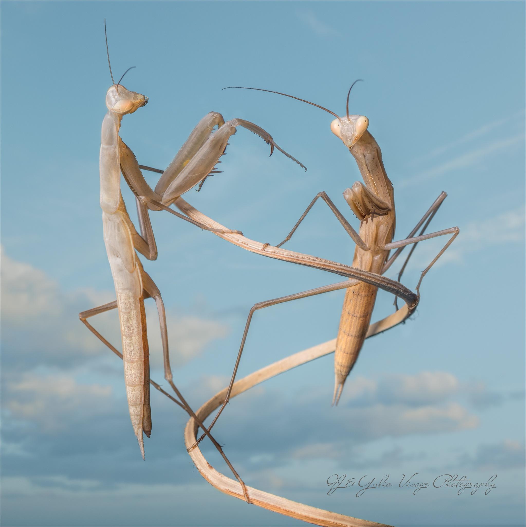 Mantis sculpture by Visage Photography