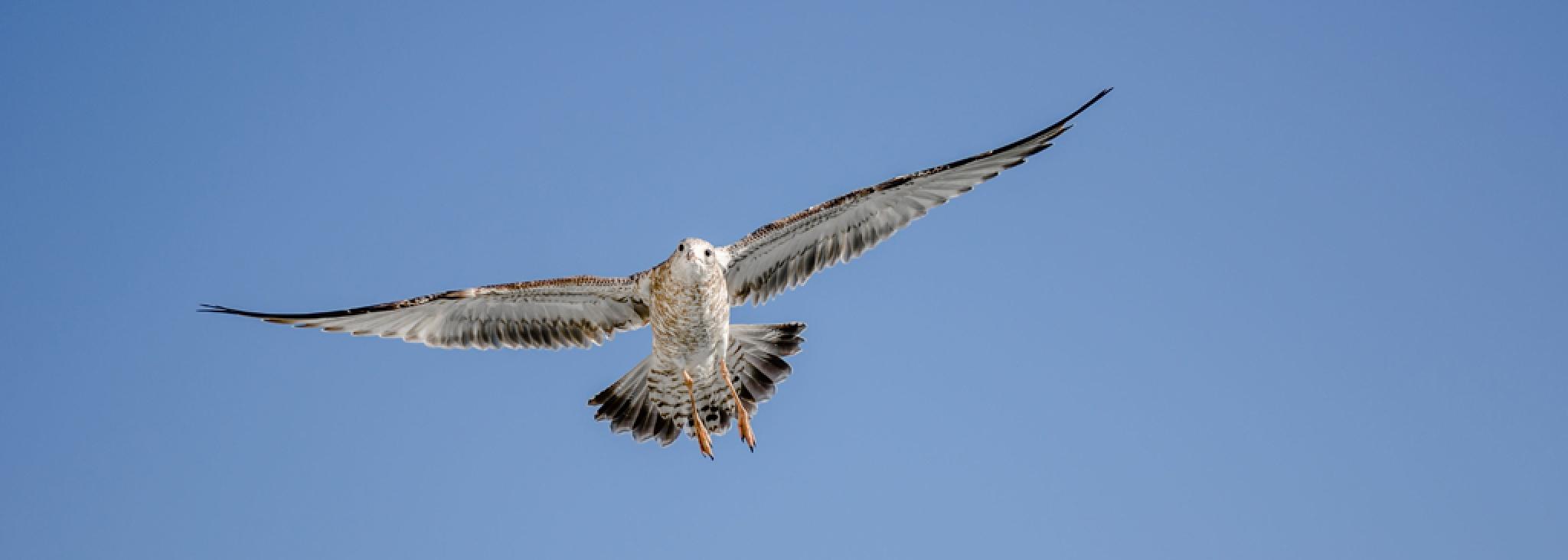 Seagull soar 2 by Captainmorgan1301