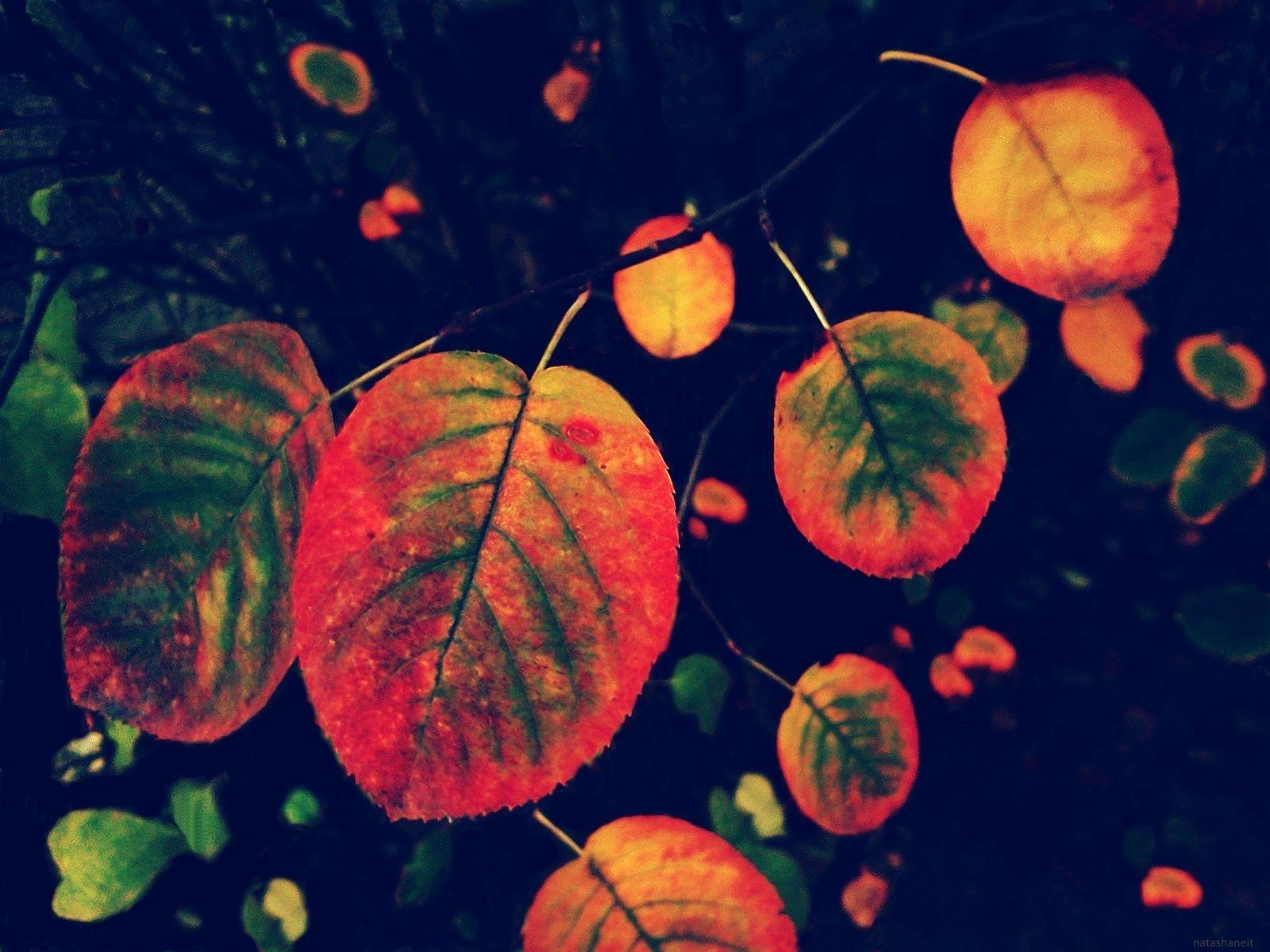 Autumn colors by natashaneit