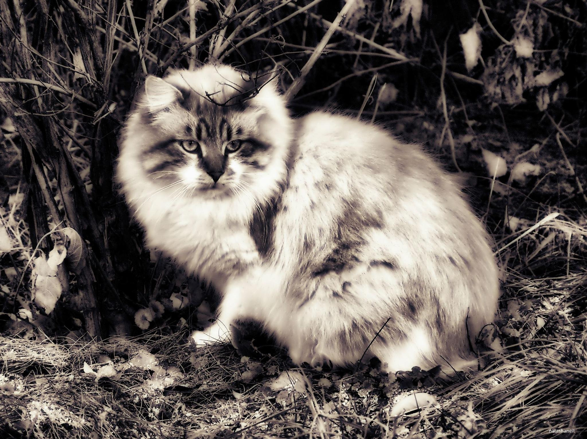 Cat on a walk by natashaneit