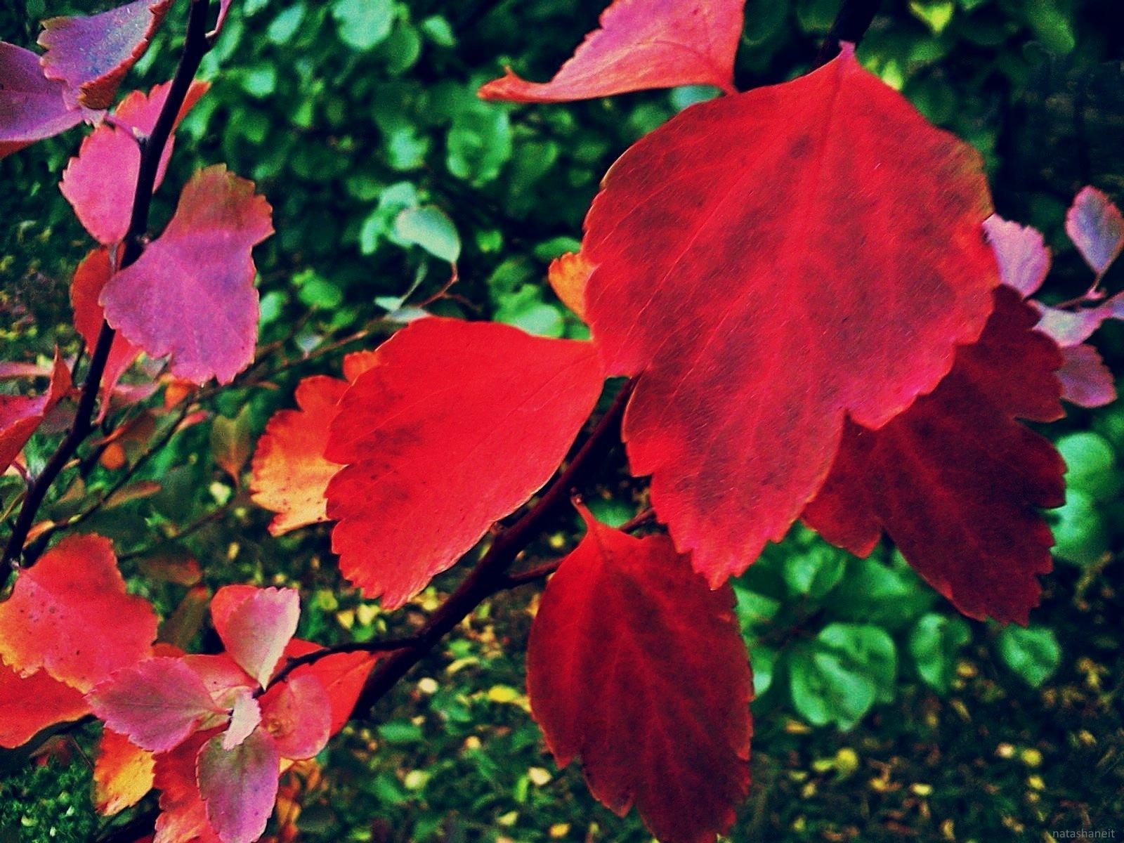 Red autumn by natashaneit
