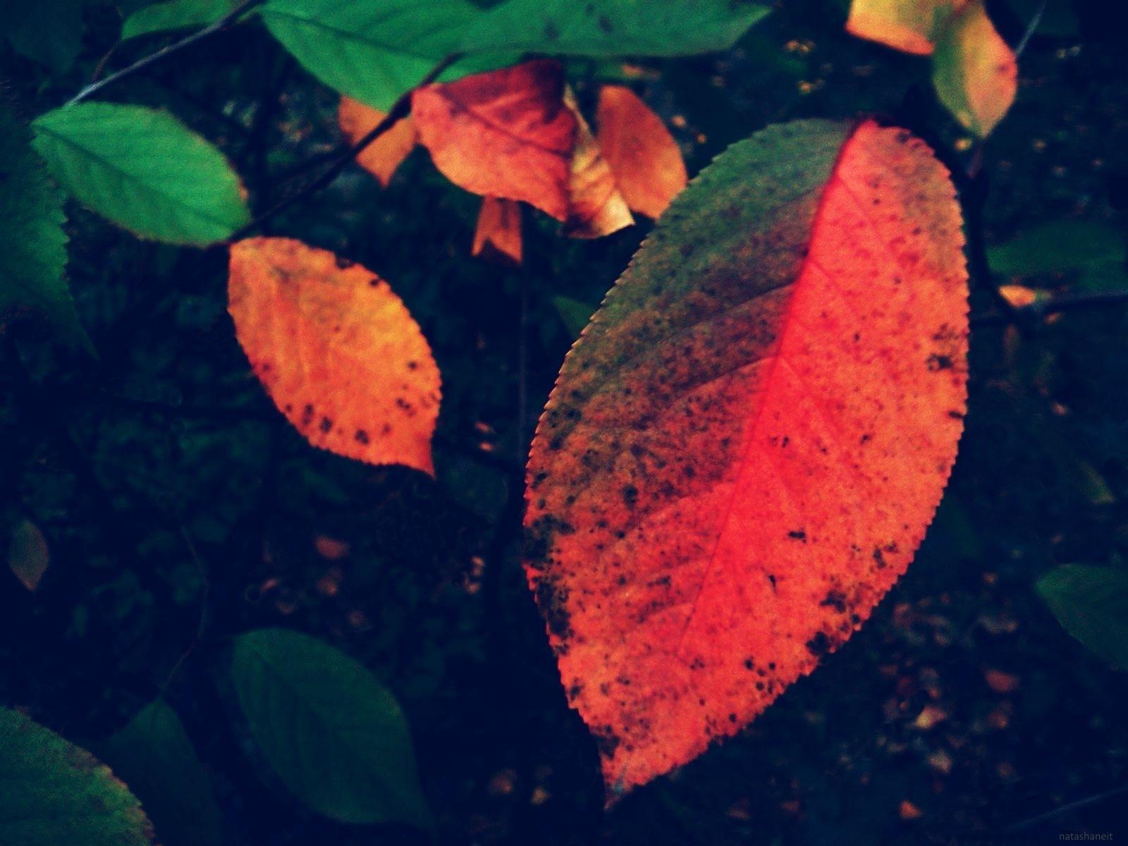 Autumn leaves by natashaneit