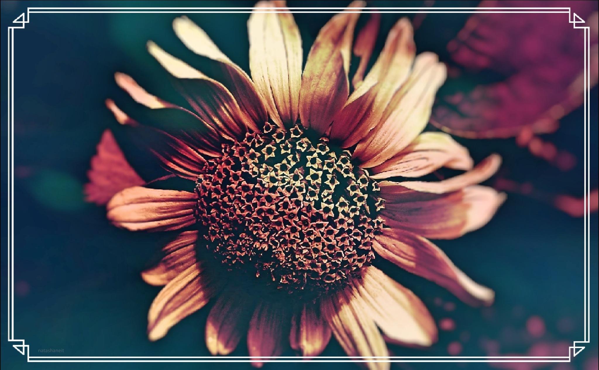 Photo in Fine Art #summer #flower #nature #art