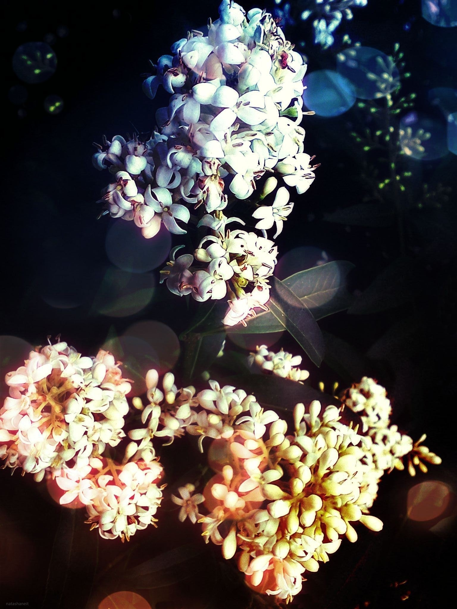 Spring flowering by natashaneit