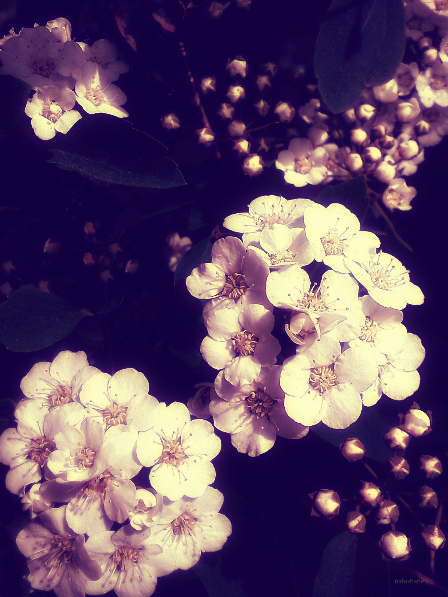 Spring bloom by natashaneit