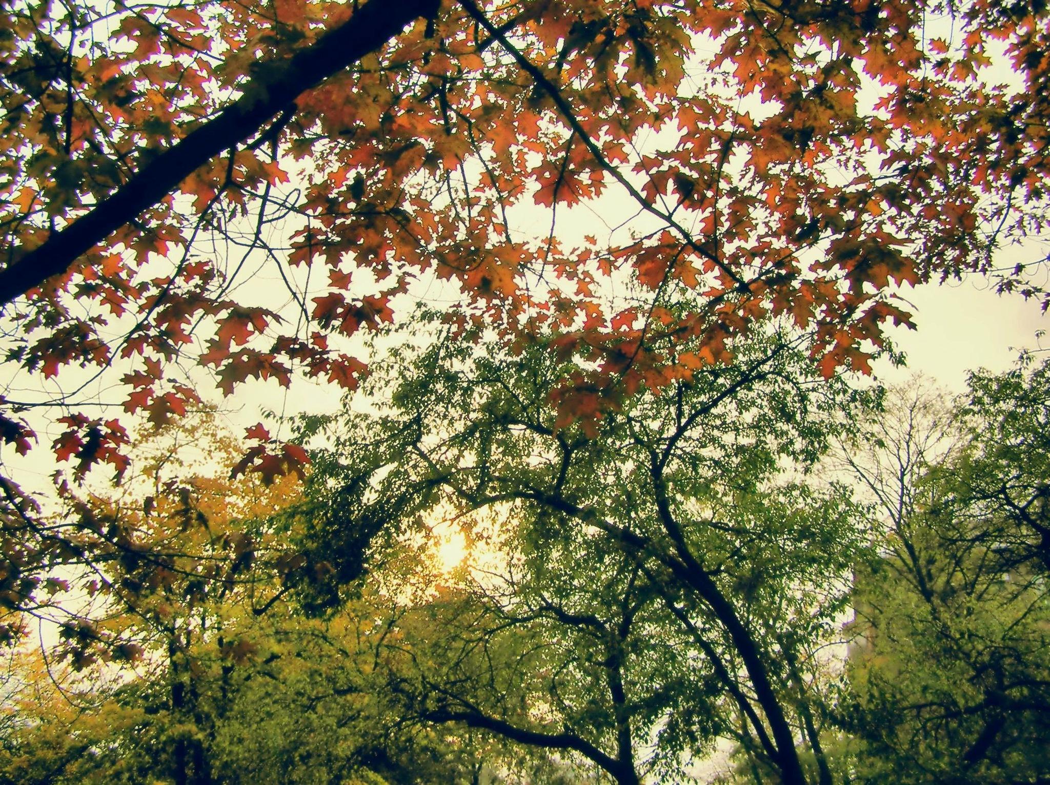 Autumn day by natashaneit