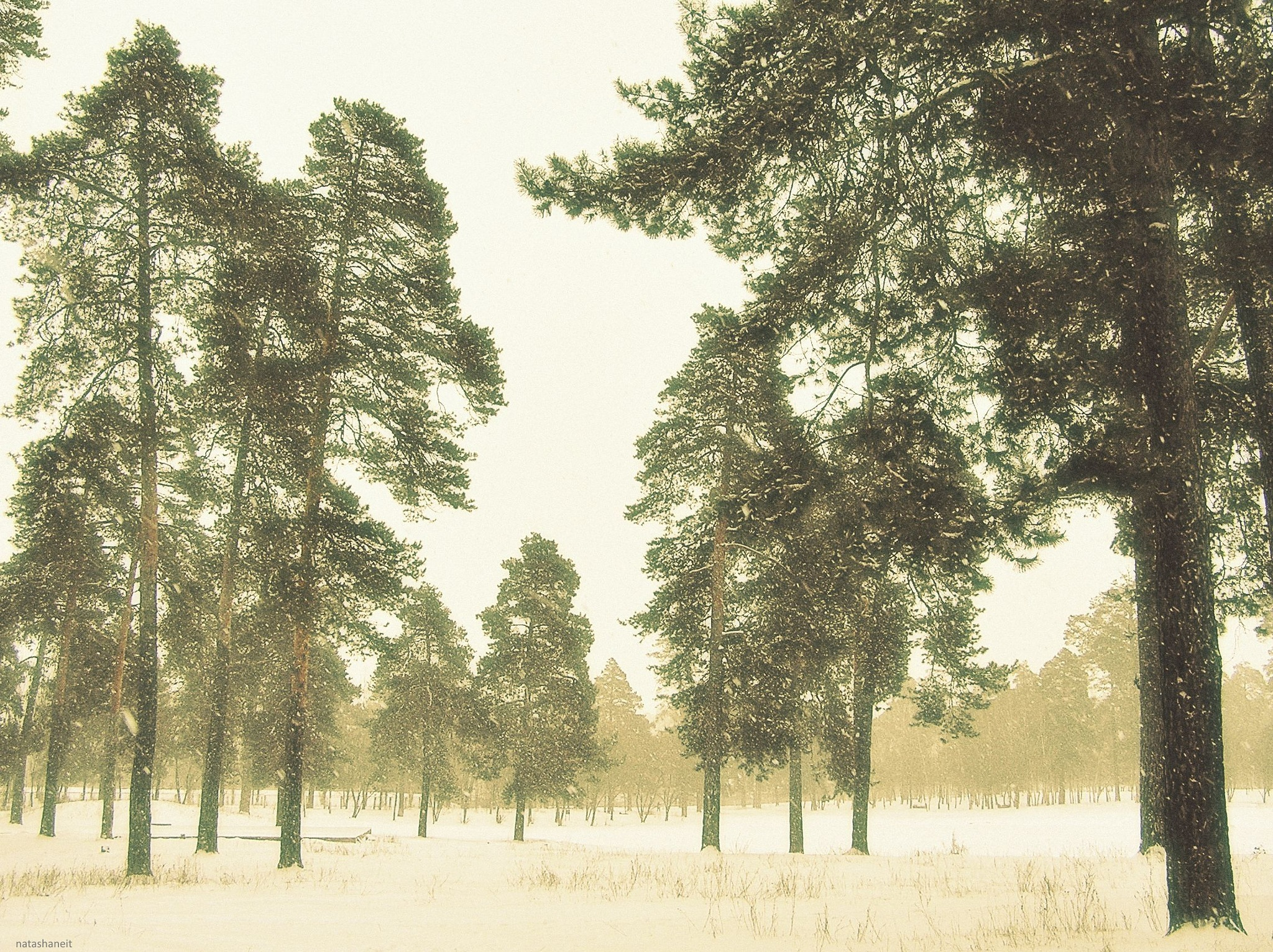 Snow day in the forest park by natashaneit