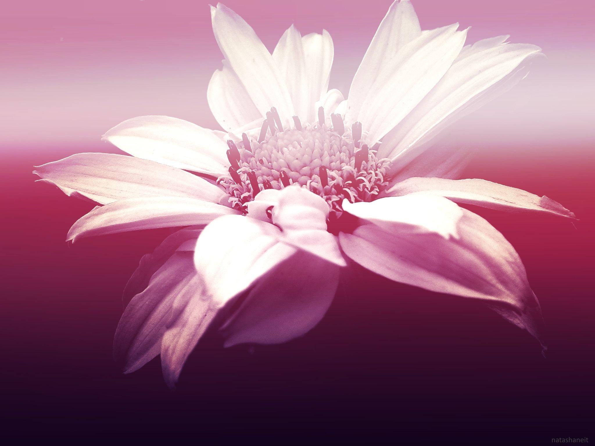 Tenderness by natashaneit