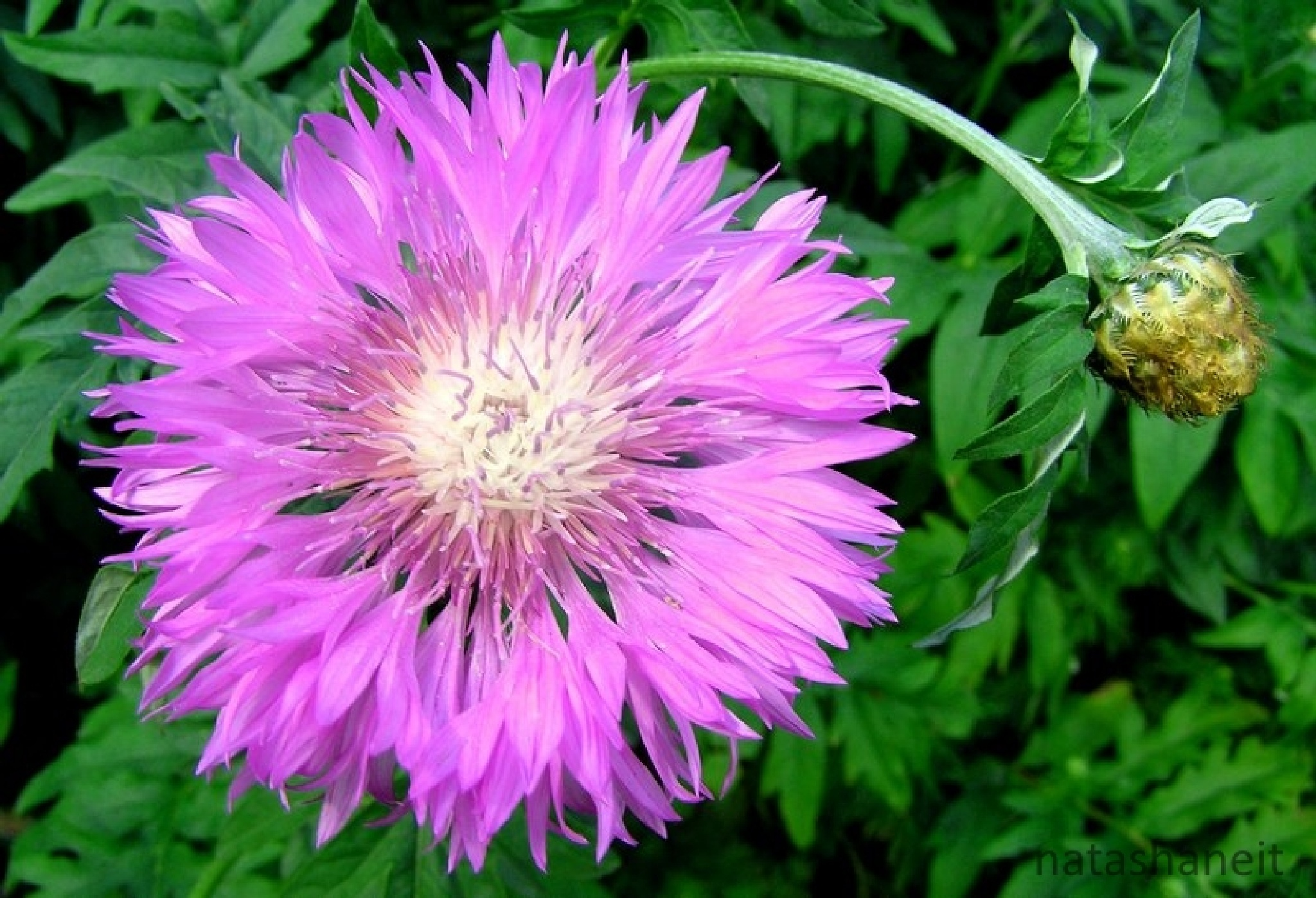 Summer flowers by natashaneit