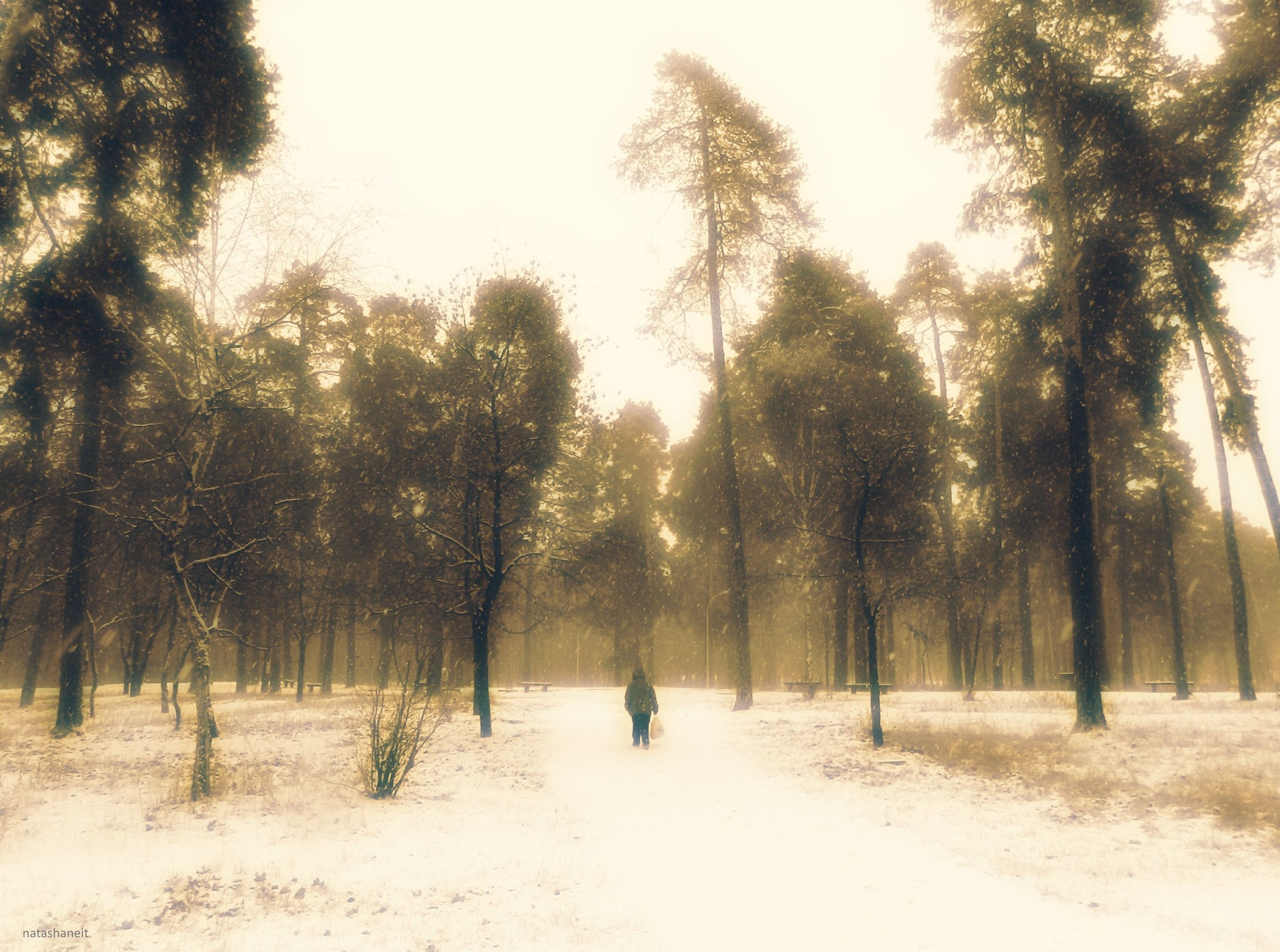 Snowy day in the forest park by natashaneit