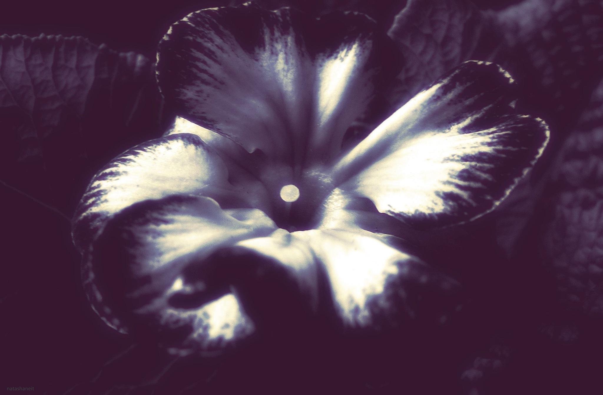 Flower by natashaneit