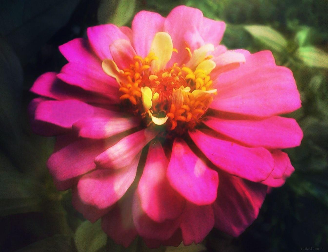 Pink dreams by natashaneit