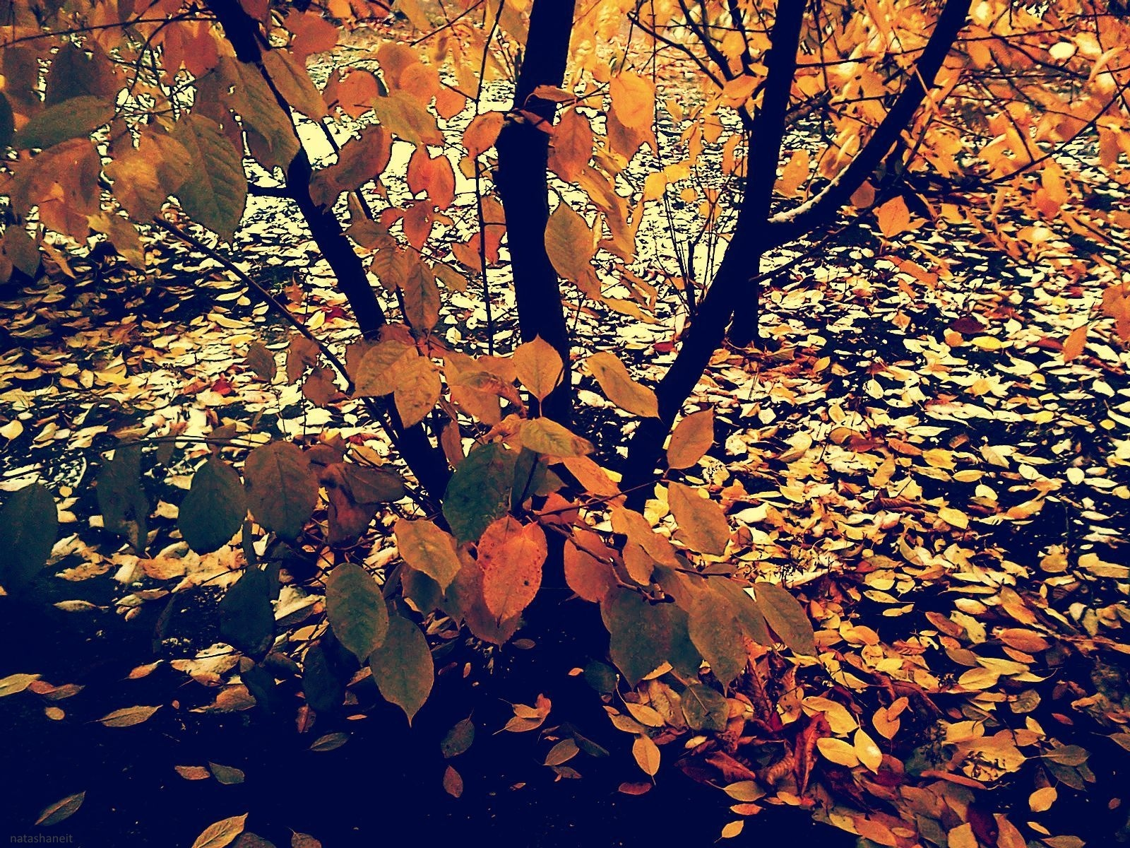 Tree and leaves by natashaneit