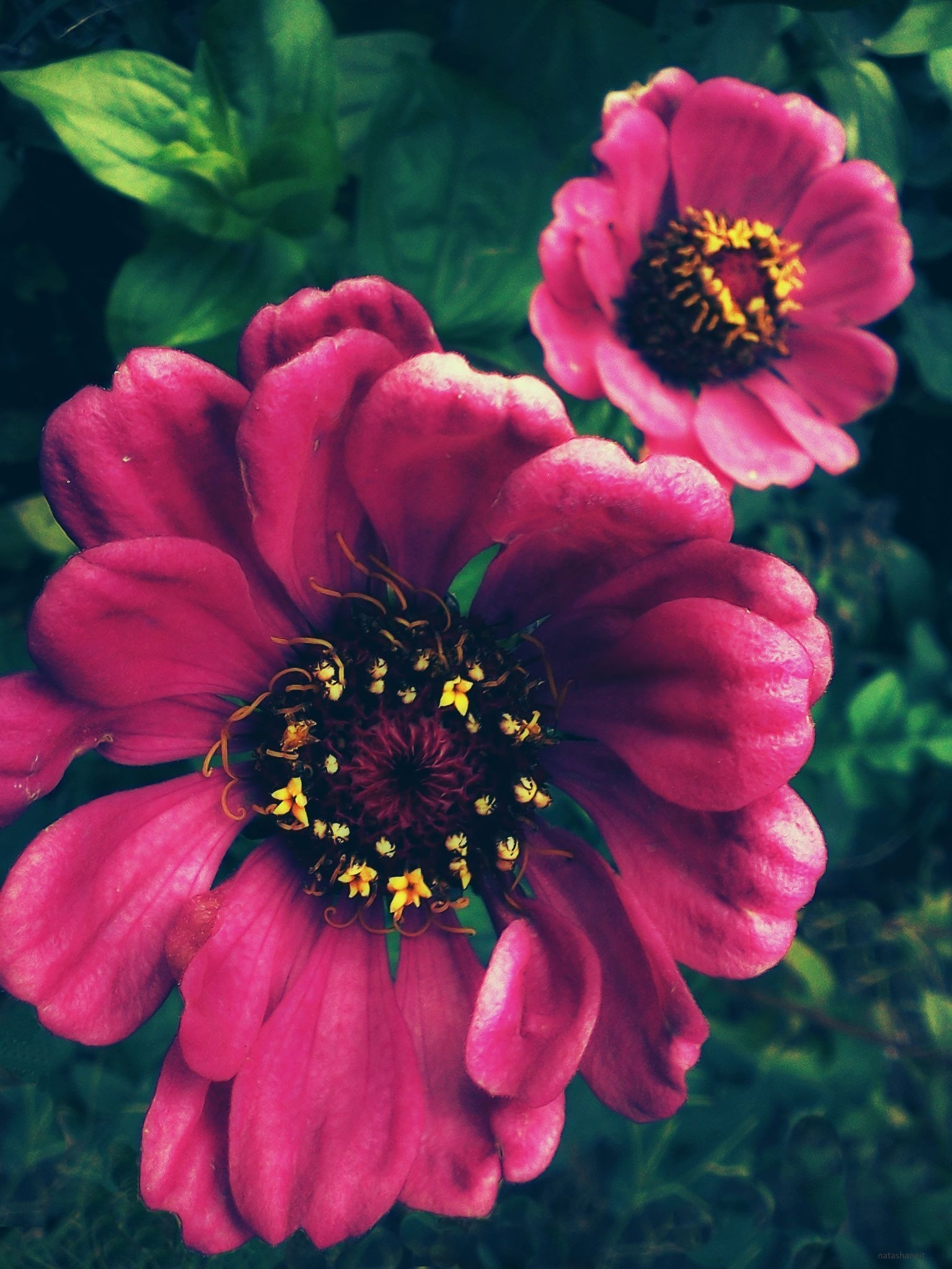 Pink by natashaneit