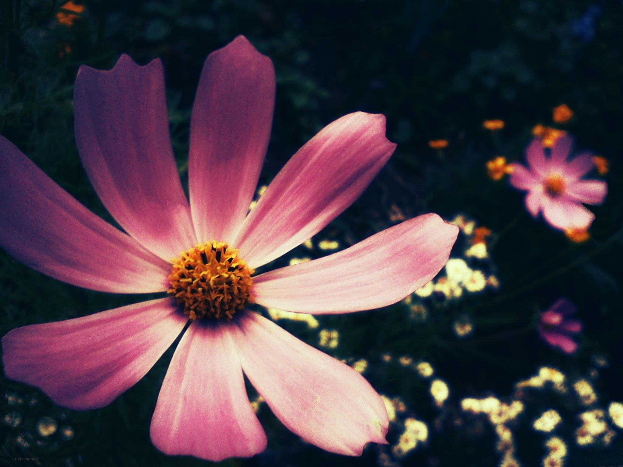 Flowers by natashaneit