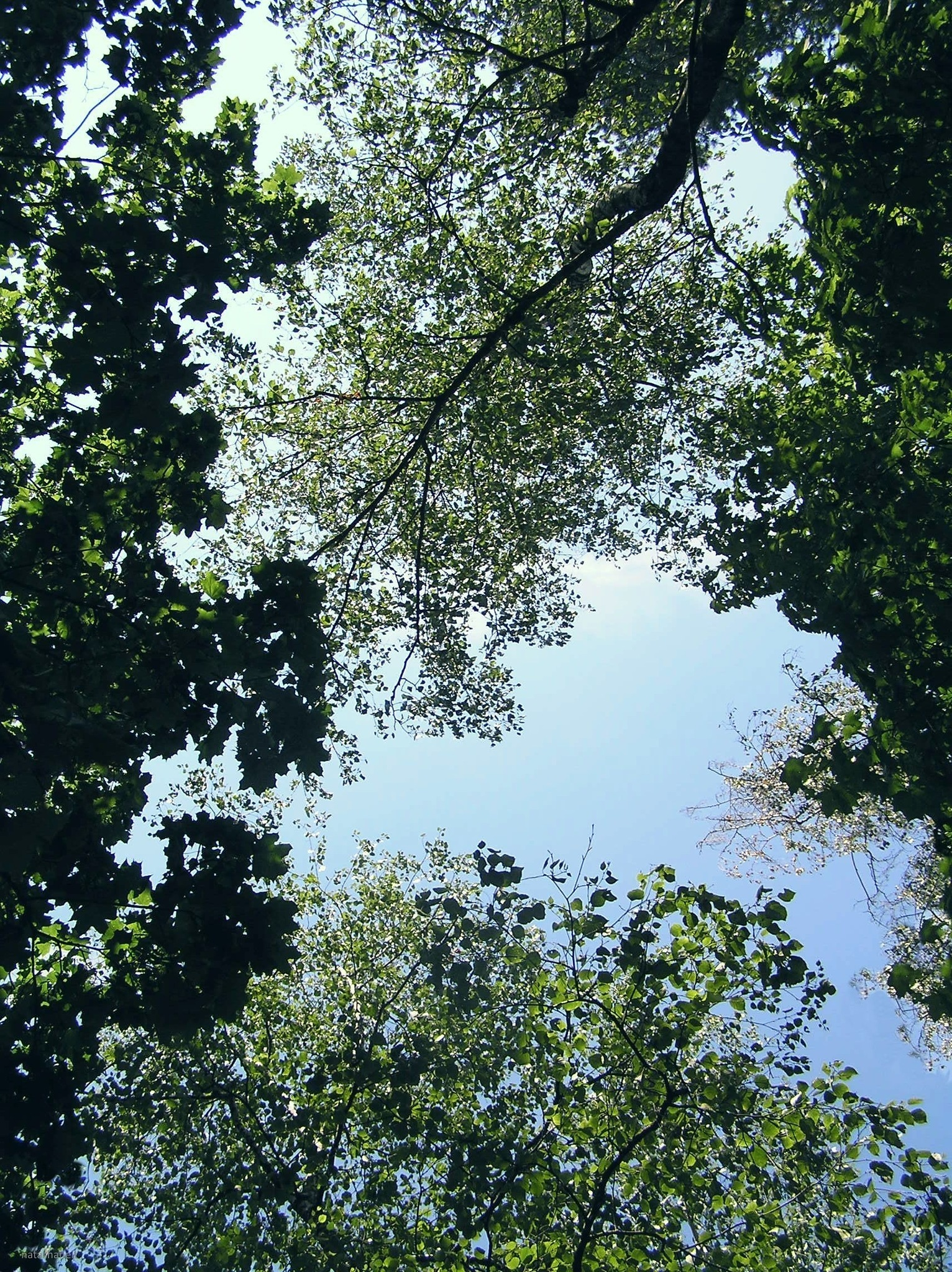 Trees in the forest park by natashaneit