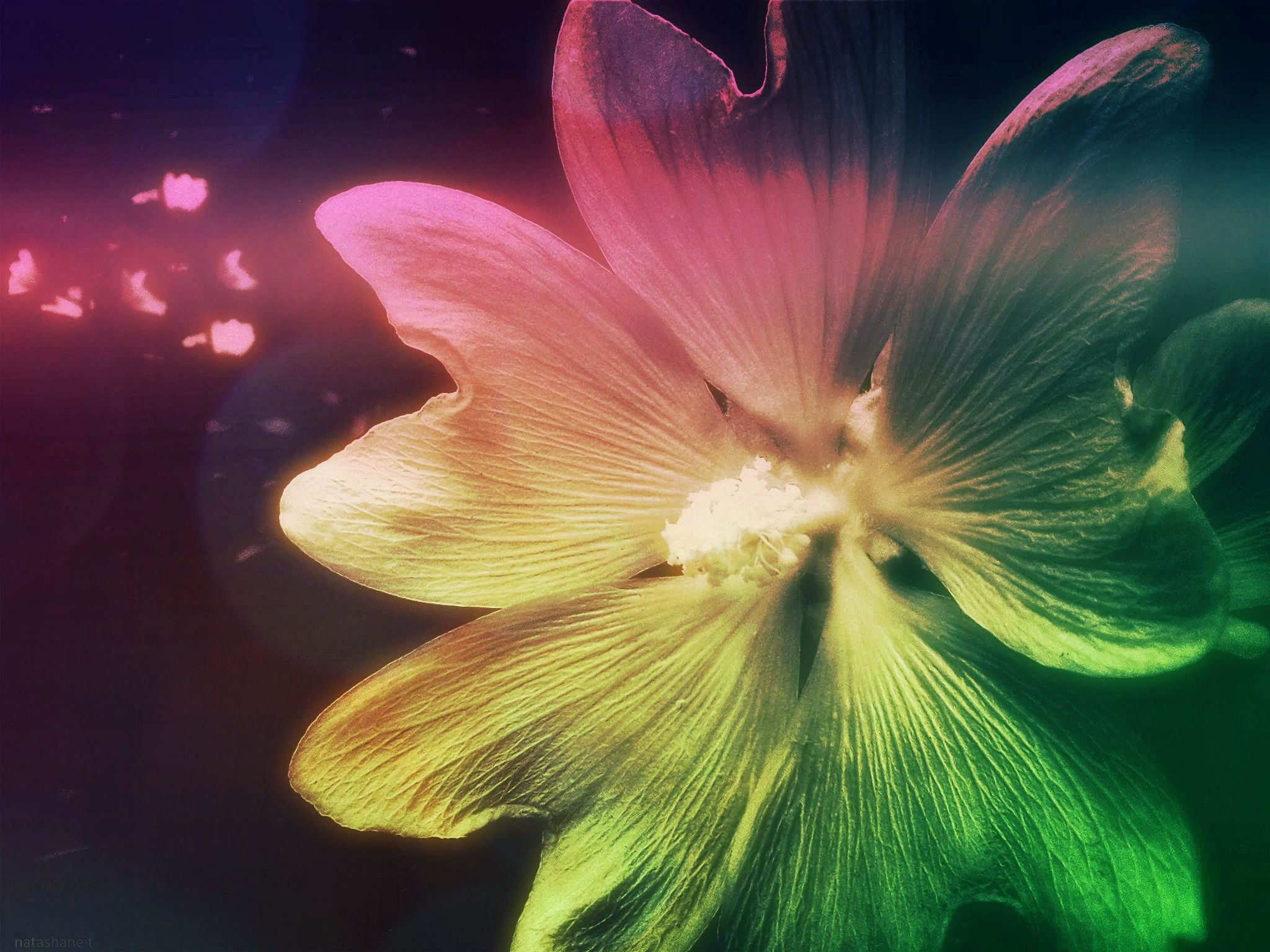 Flower and light-effect by natashaneit