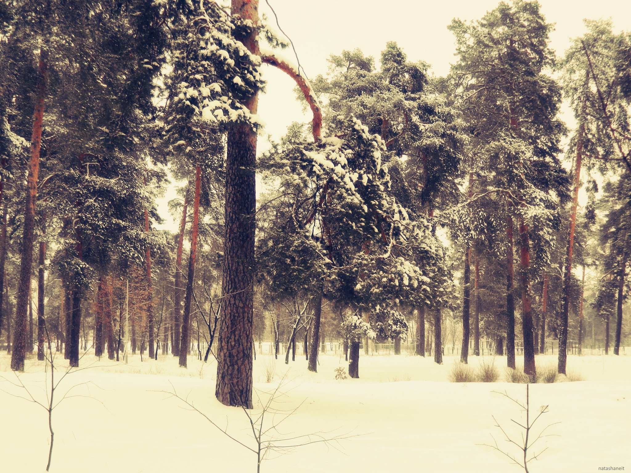 Snowy day in the forest-park by natashaneit