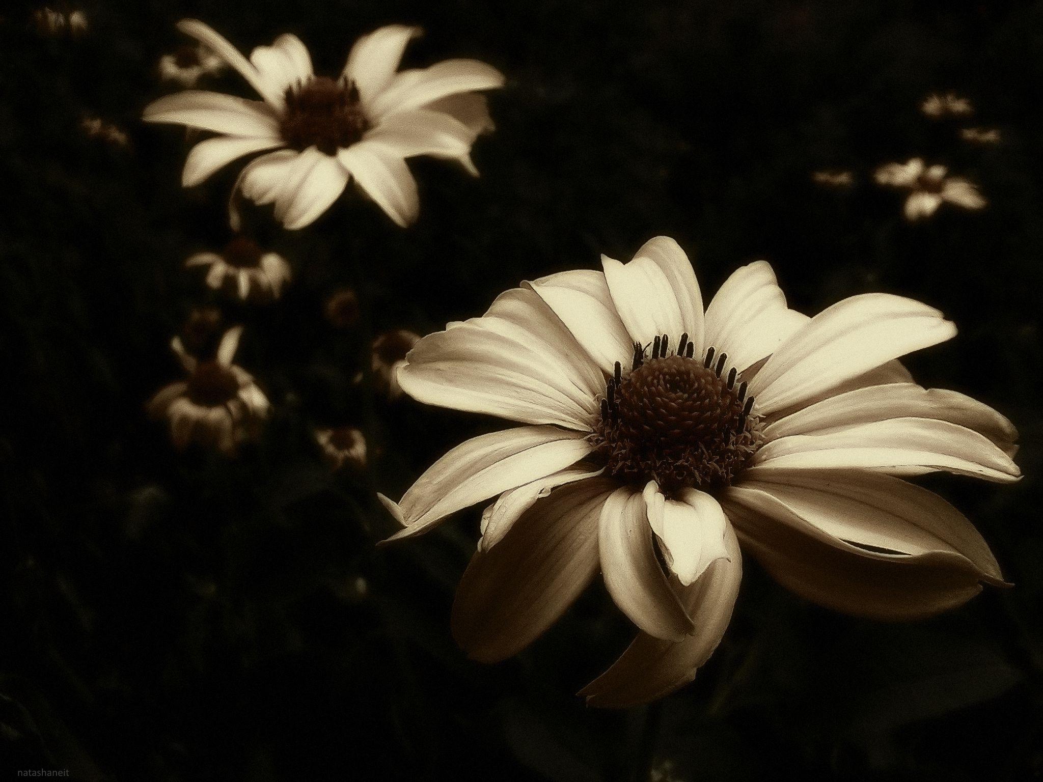 Flowers  in summer night by natashaneit