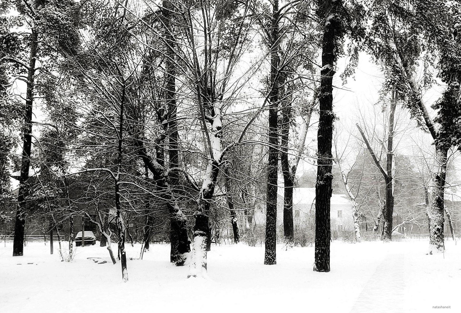 Snowy january by natashaneit