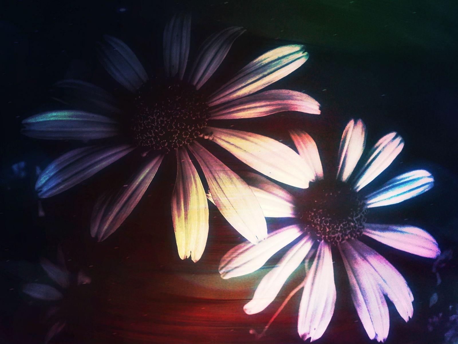 Daisies by natashaneit