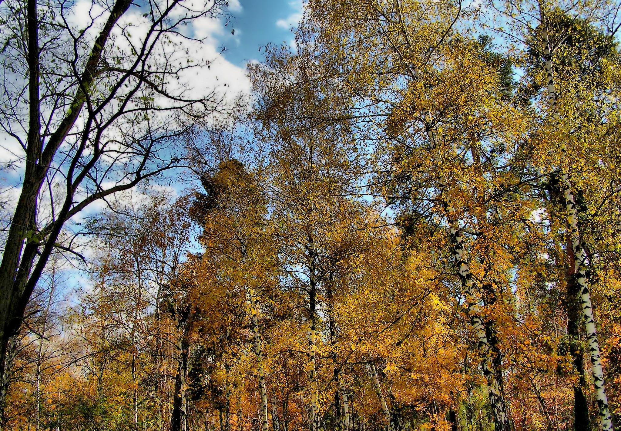 Autumn forest by natashaneit