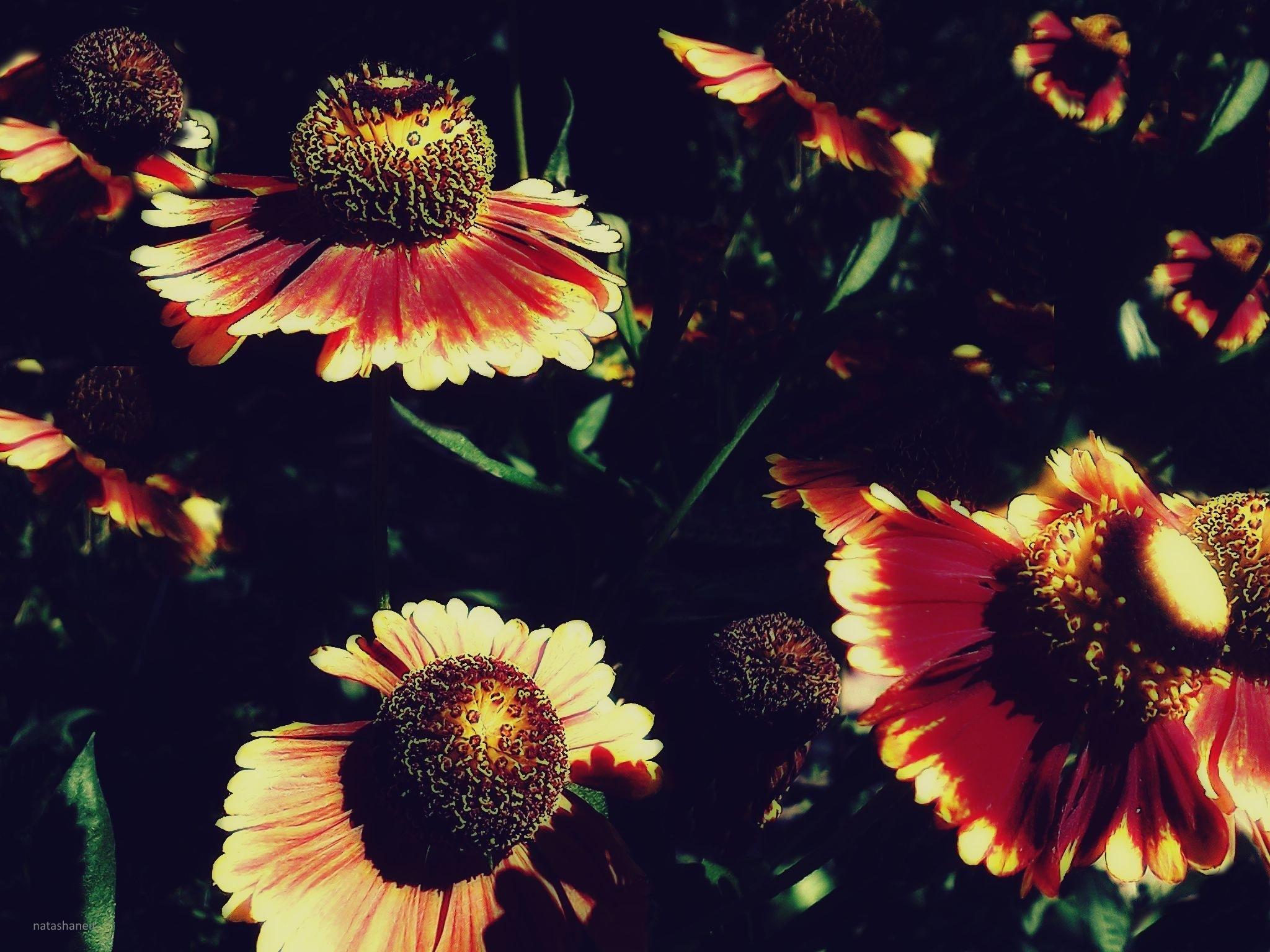 Flowers in the garden by natashaneit