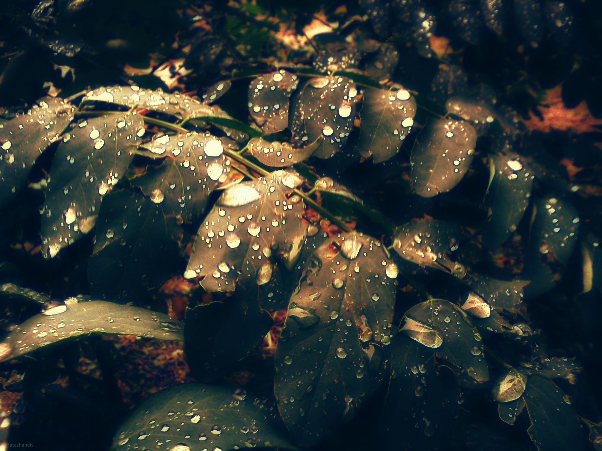 Leaves after the rain by natashaneit