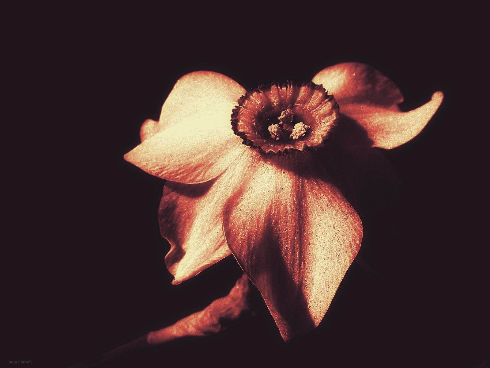 Narcis by natashaneit