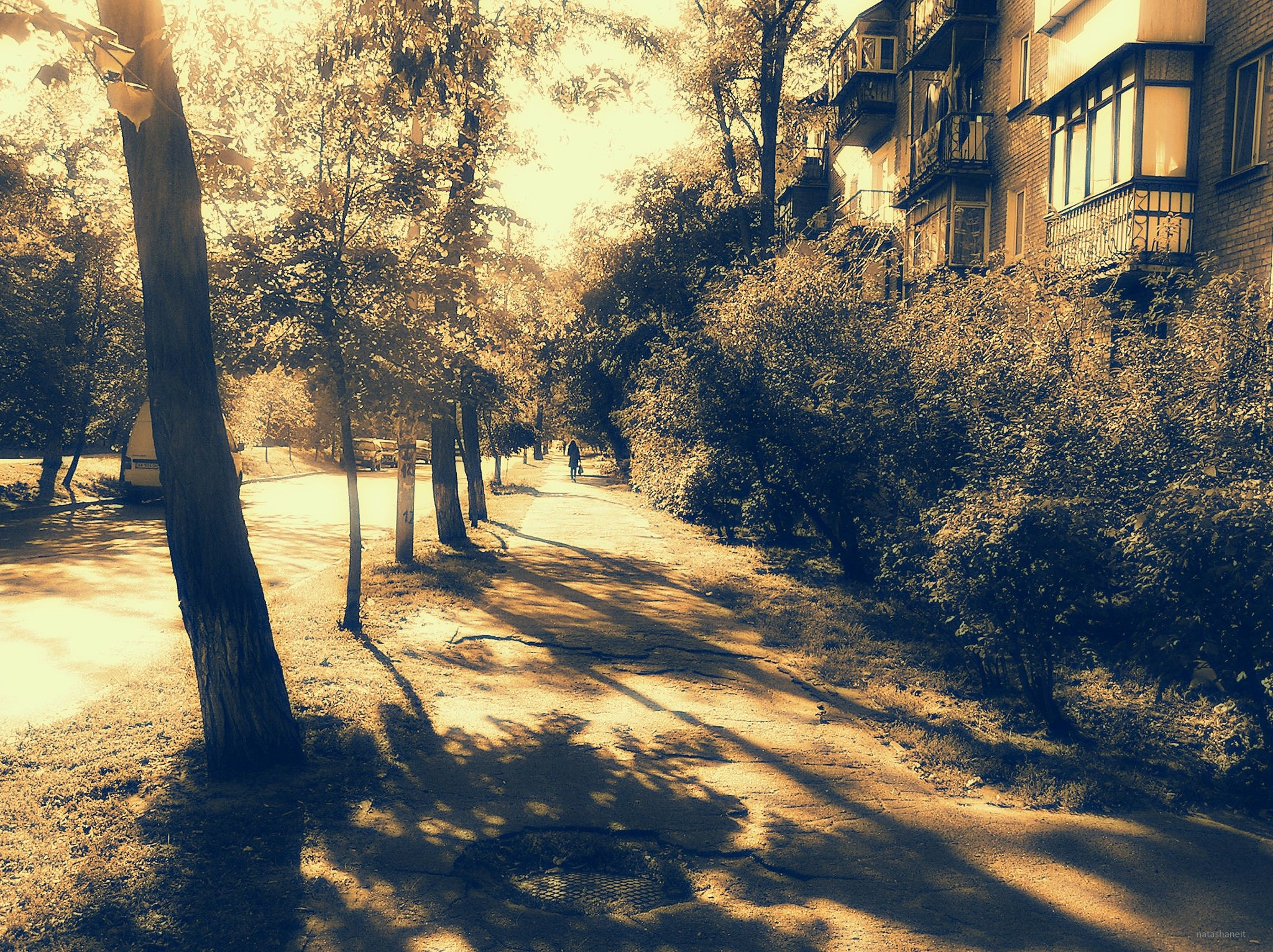 Sunny autumn by natashaneit