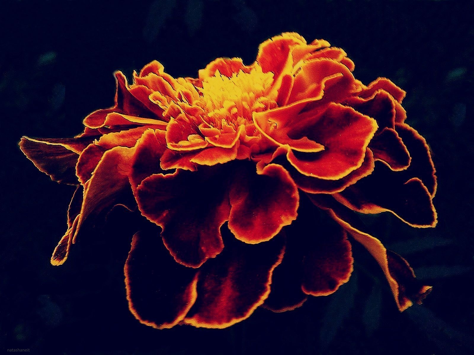 Autumn flower by natashaneit