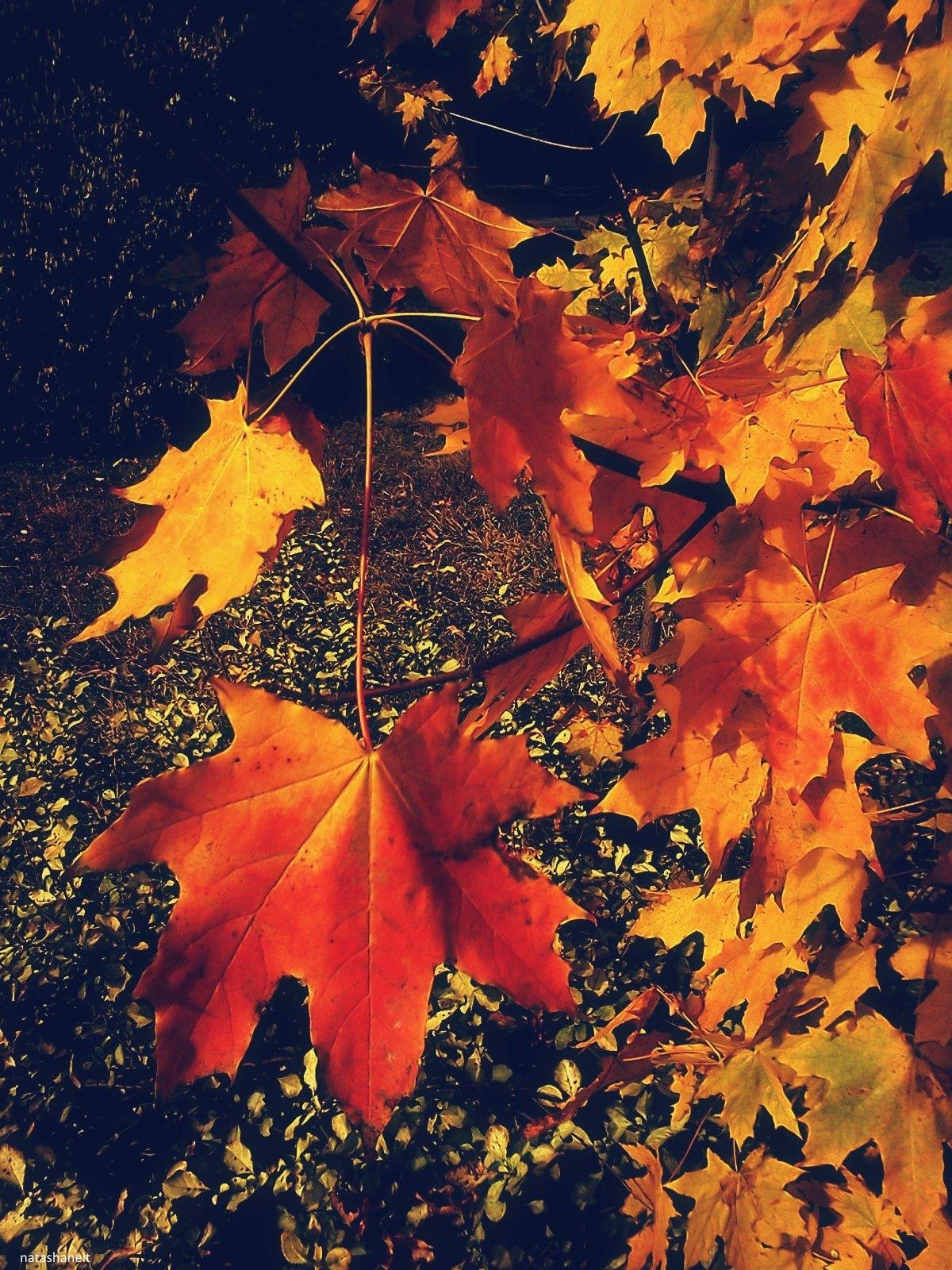 Golden autumn by natashaneit