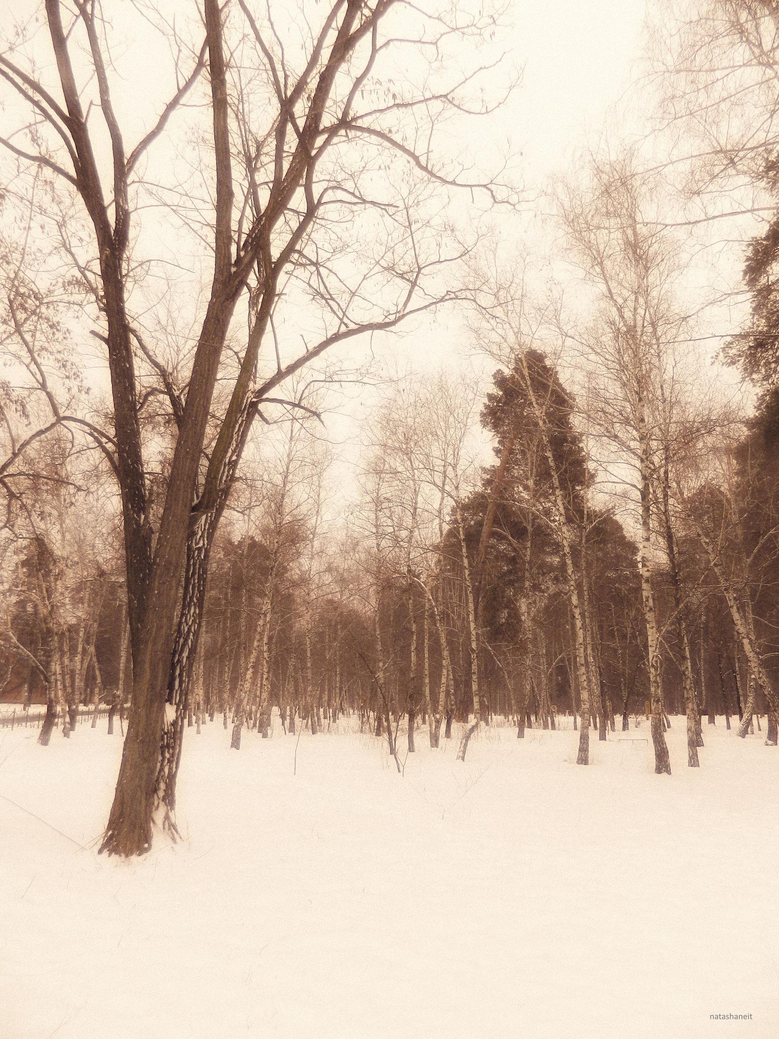 Forest park by natashaneit