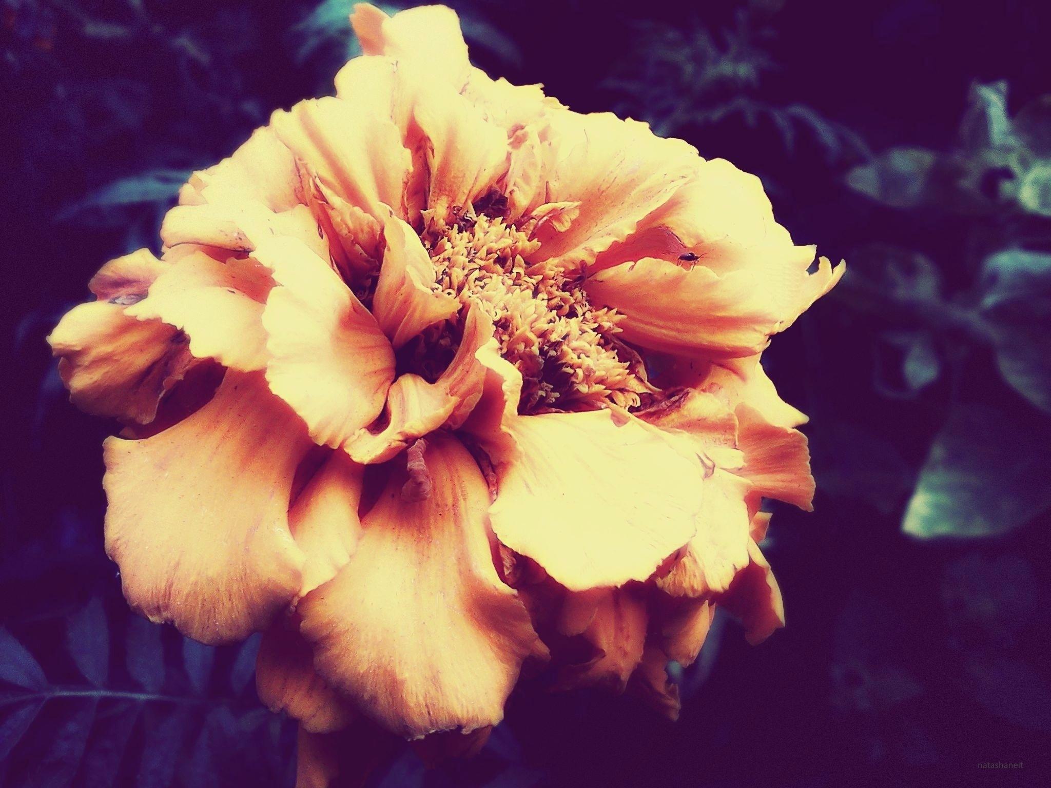 Flower in October by natashaneit