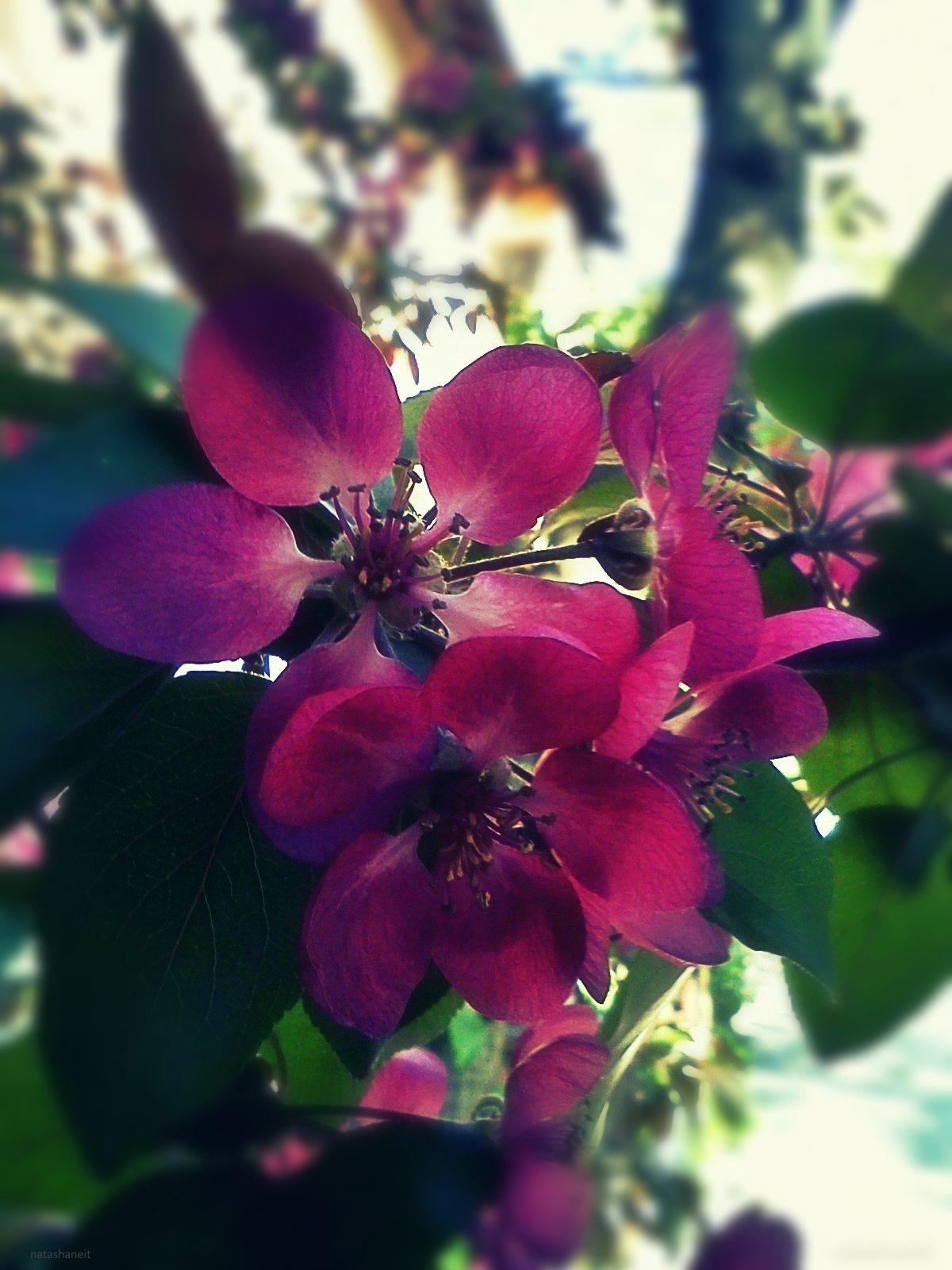 Pink flowering by natashaneit