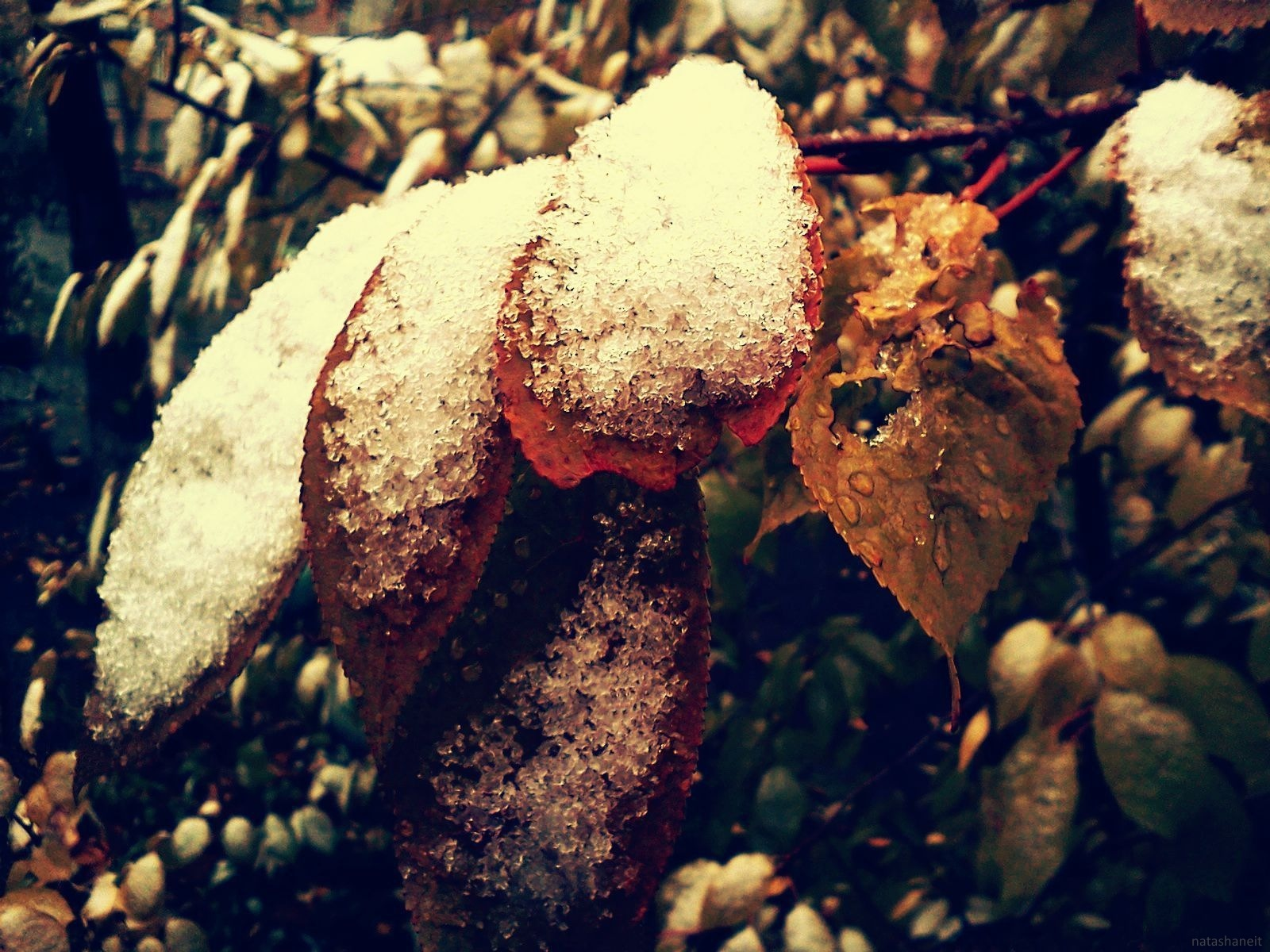 First snow in early November by natashaneit
