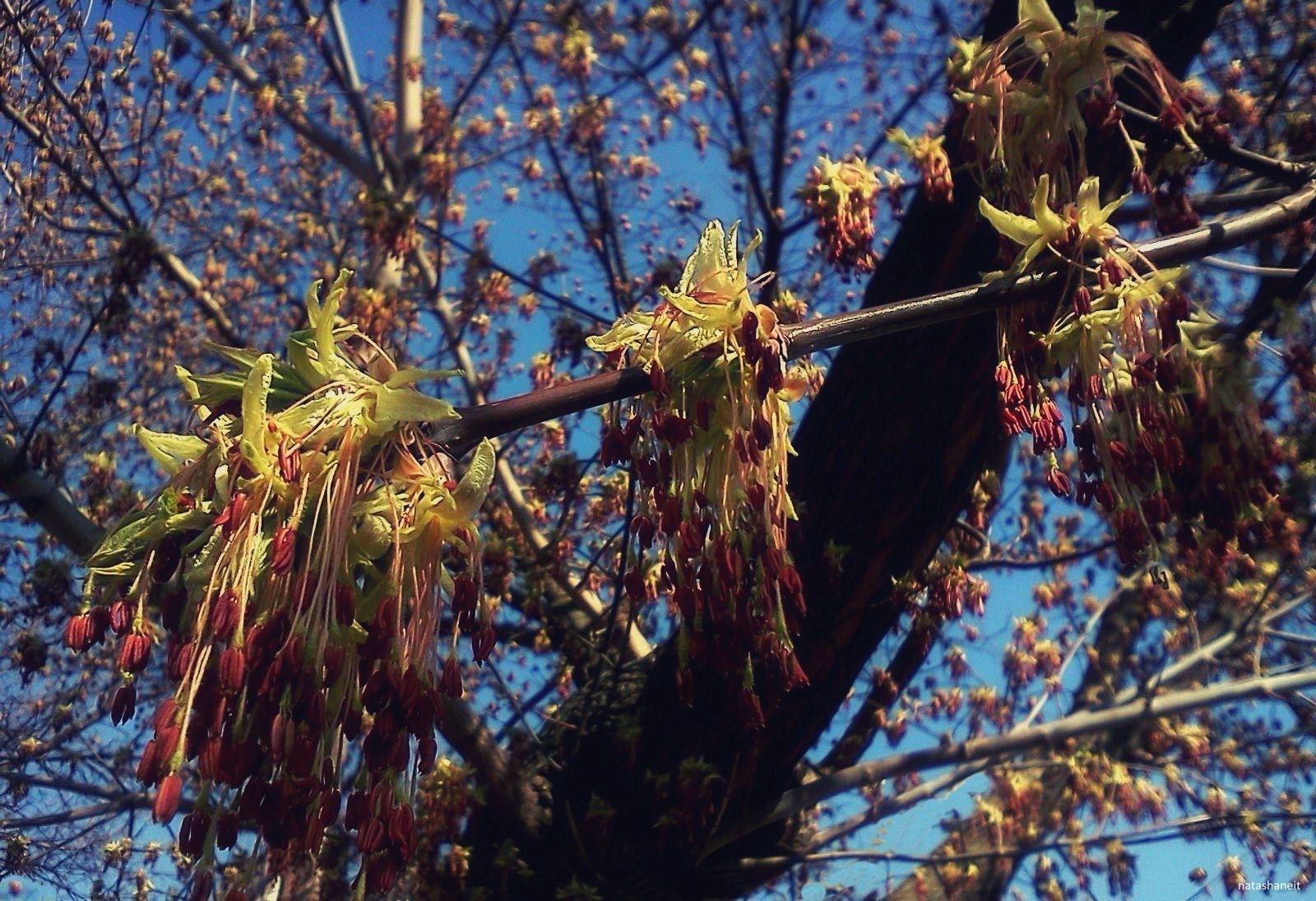 Spring tree by natashaneit