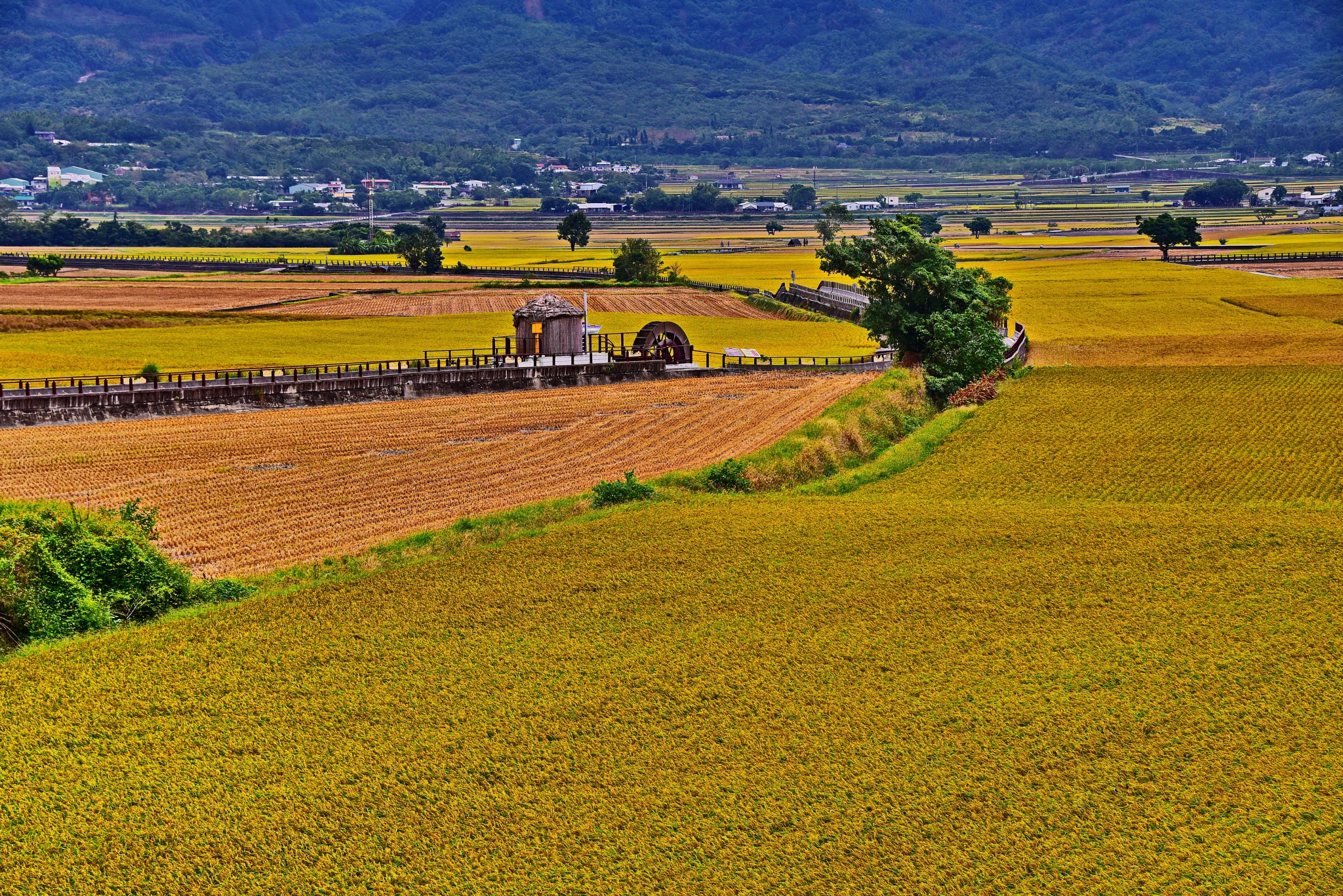 Rural scenery ~ paddy field. by petertyghbn
