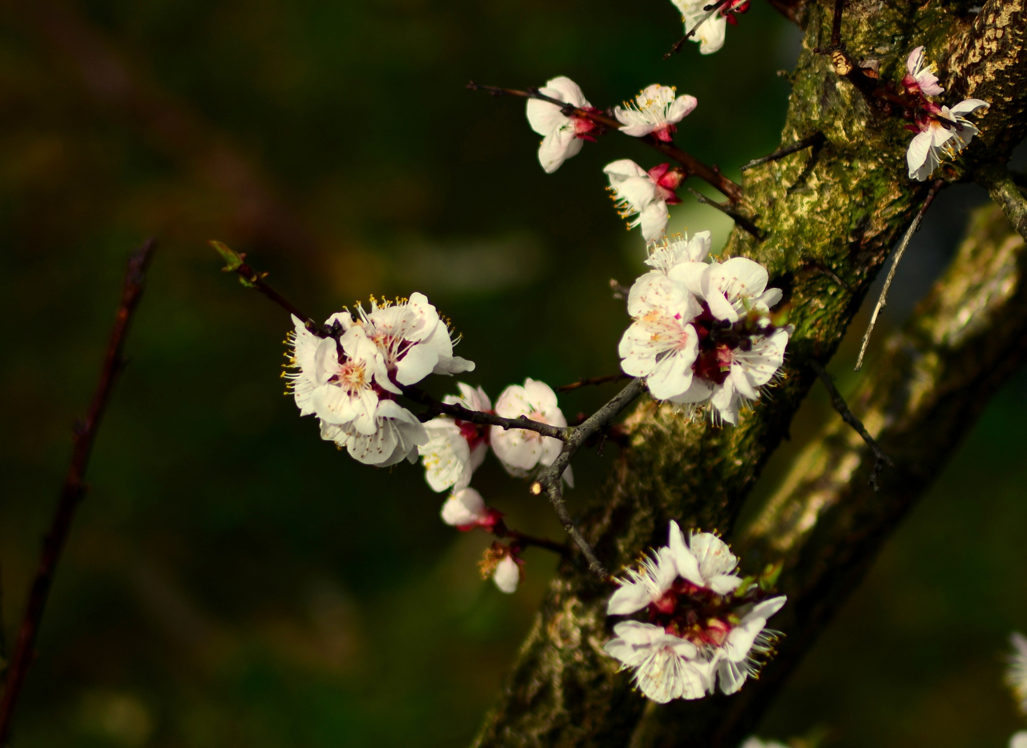 Spring glory by Stoica Emilian