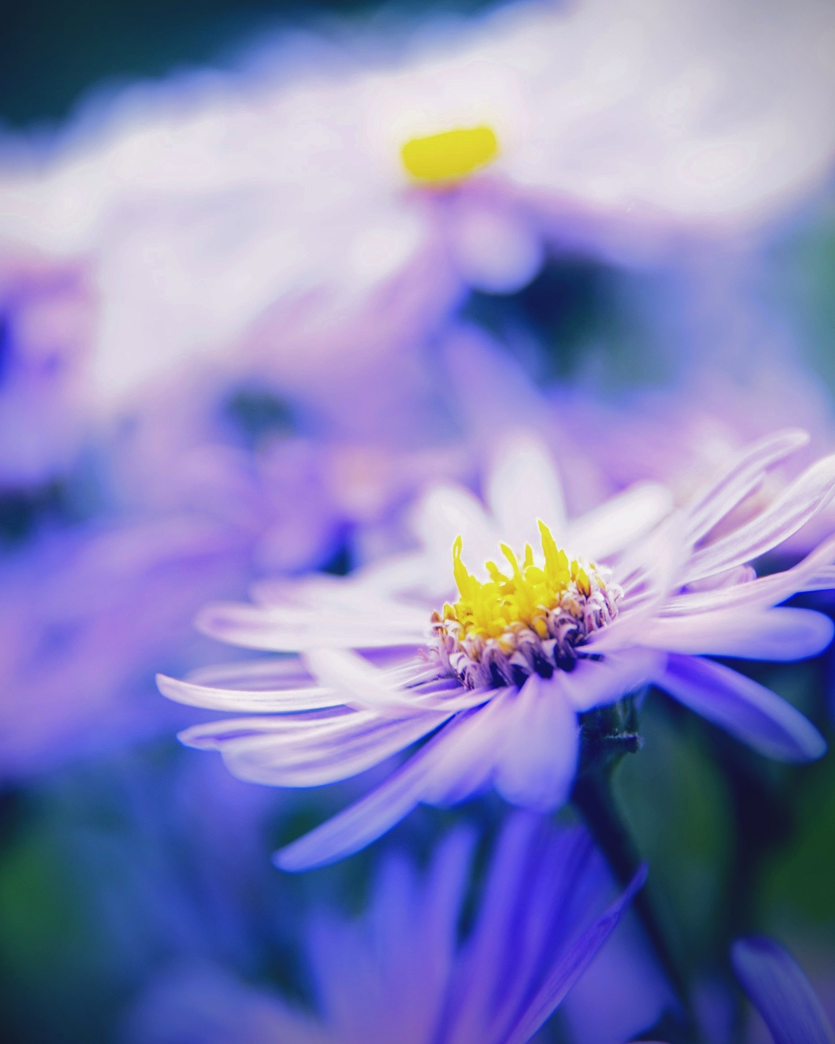 Flower crown  by Stoica Emilian