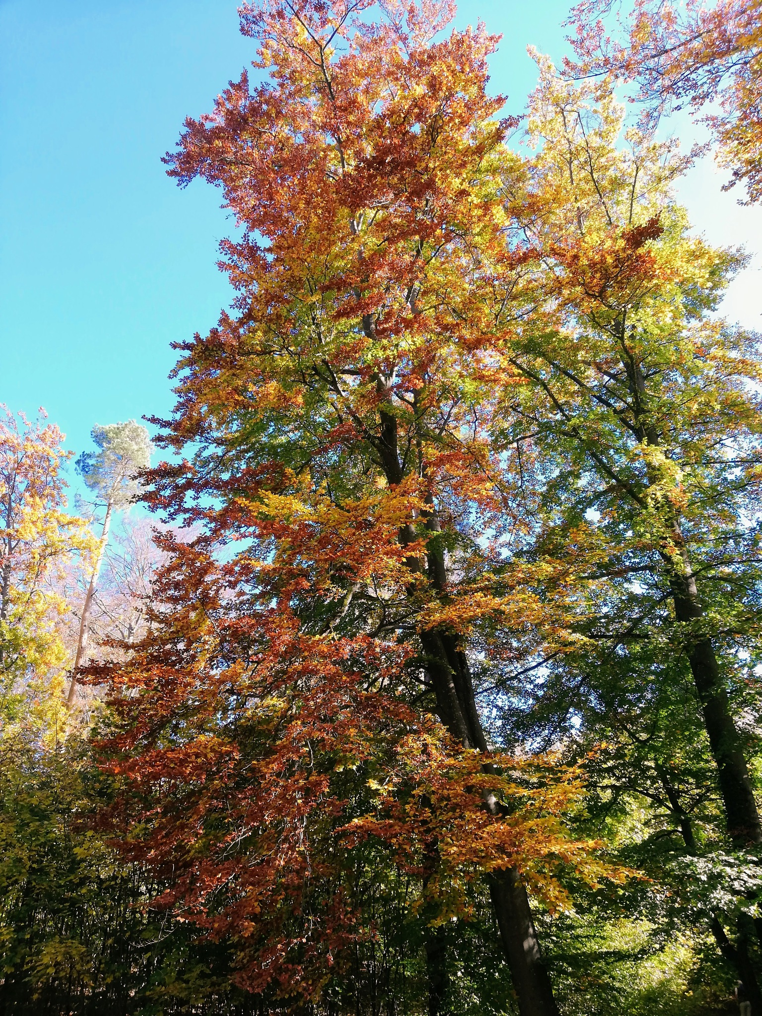 Autumn Tree  by Stoica Emilian