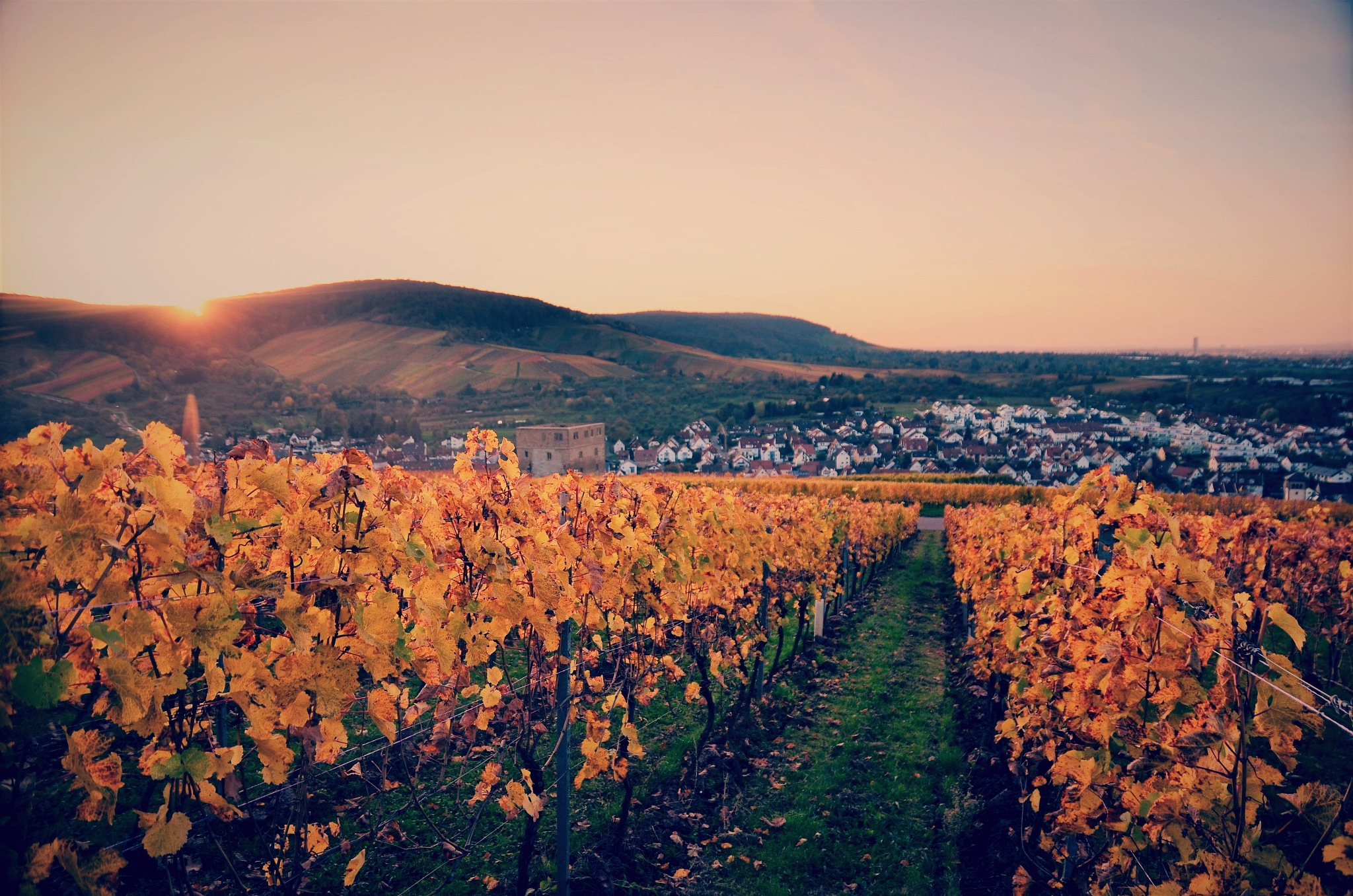 Sunset in the Vineyards  by Stoica Emilian